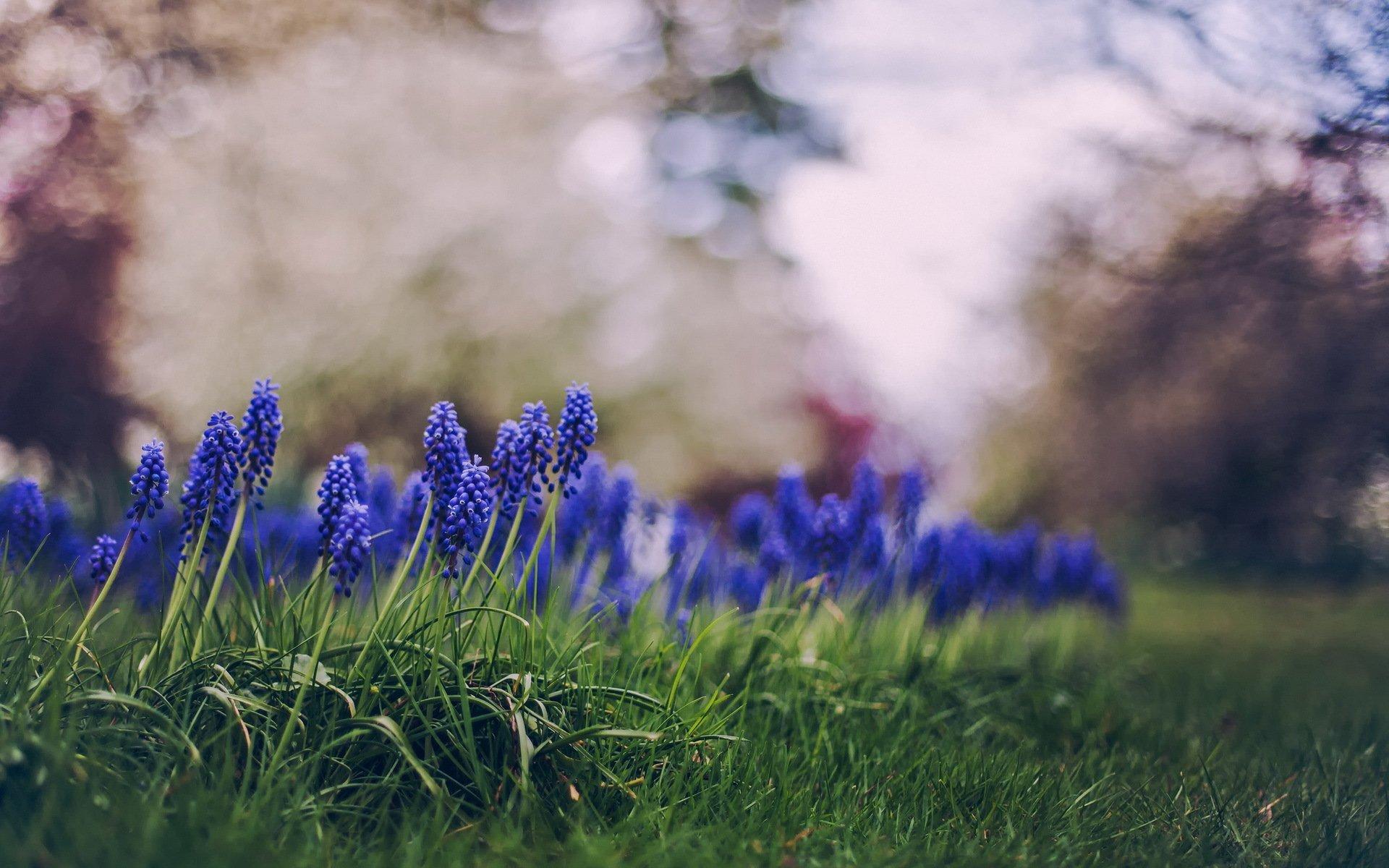 природа цветы фиолетовые трава nature flowers purple grass бесплатно