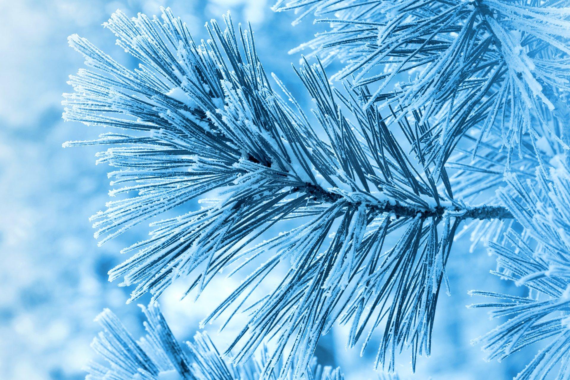 снег ели зима  № 3180840 бесплатно