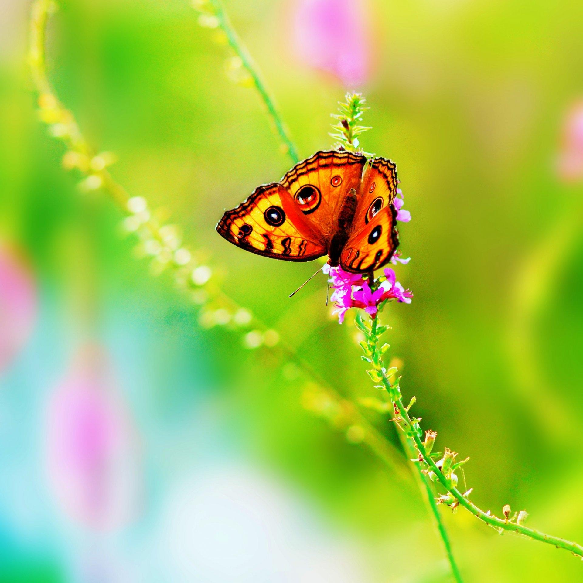 Обои насекомое, цветы. Природа foto 13
