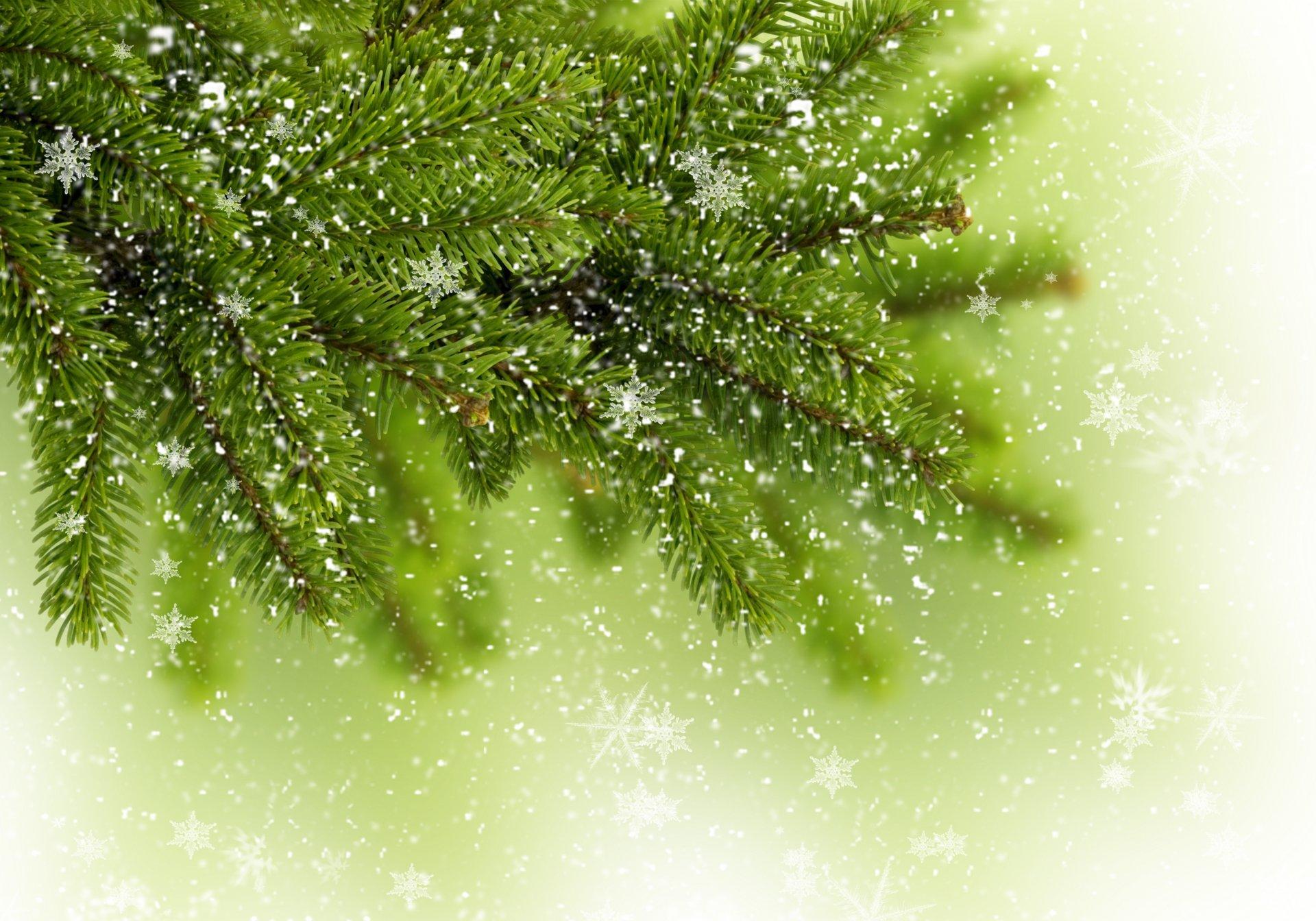 Картинка с еловыми ветками, днем рождения видео
