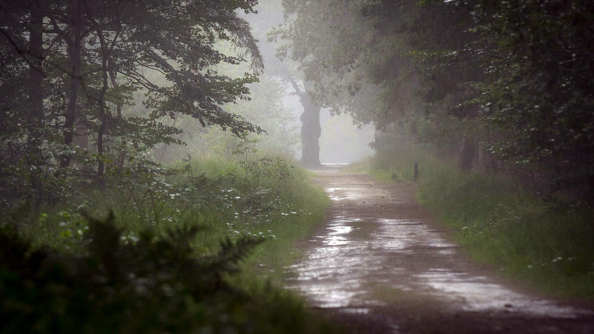мужик дождь в лесу обои и картинки помню когда