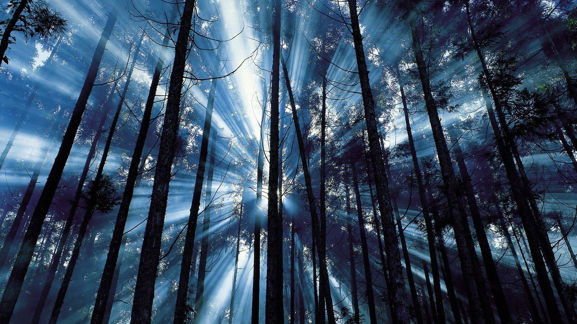 Лучи лес деревья  № 3847380 бесплатно