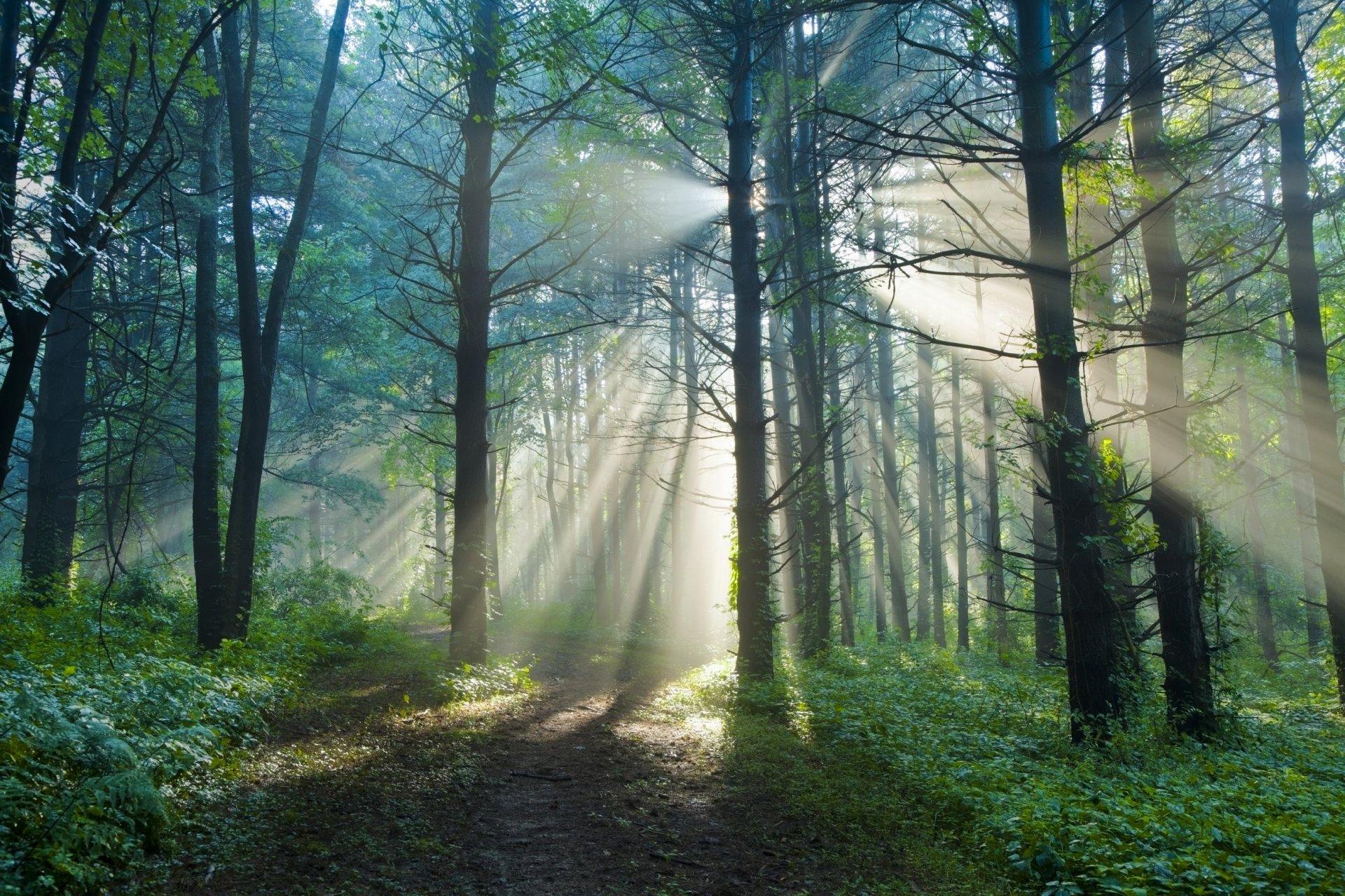 лес летним утром картинки выбор балконной