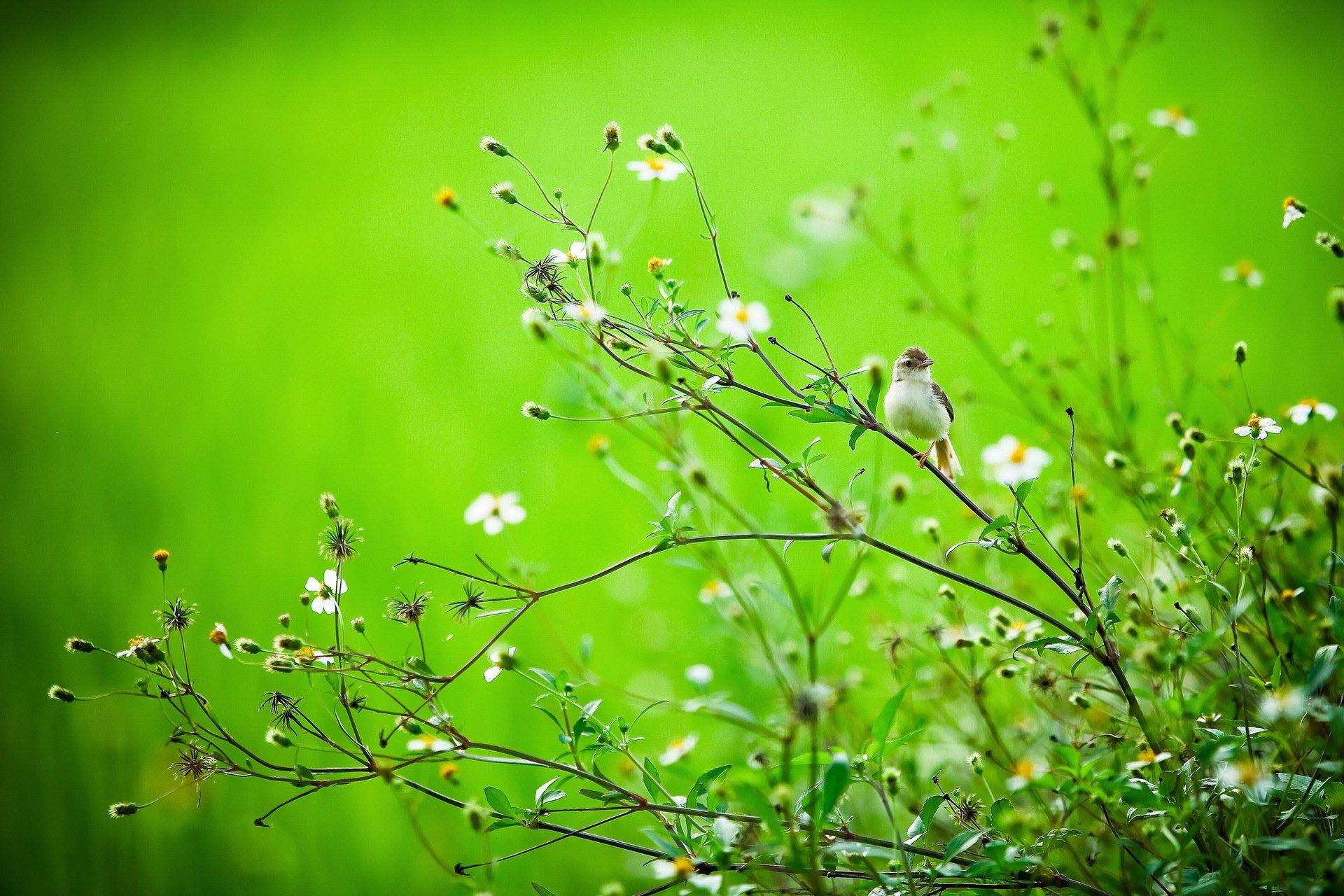 природа трава ветка загрузить