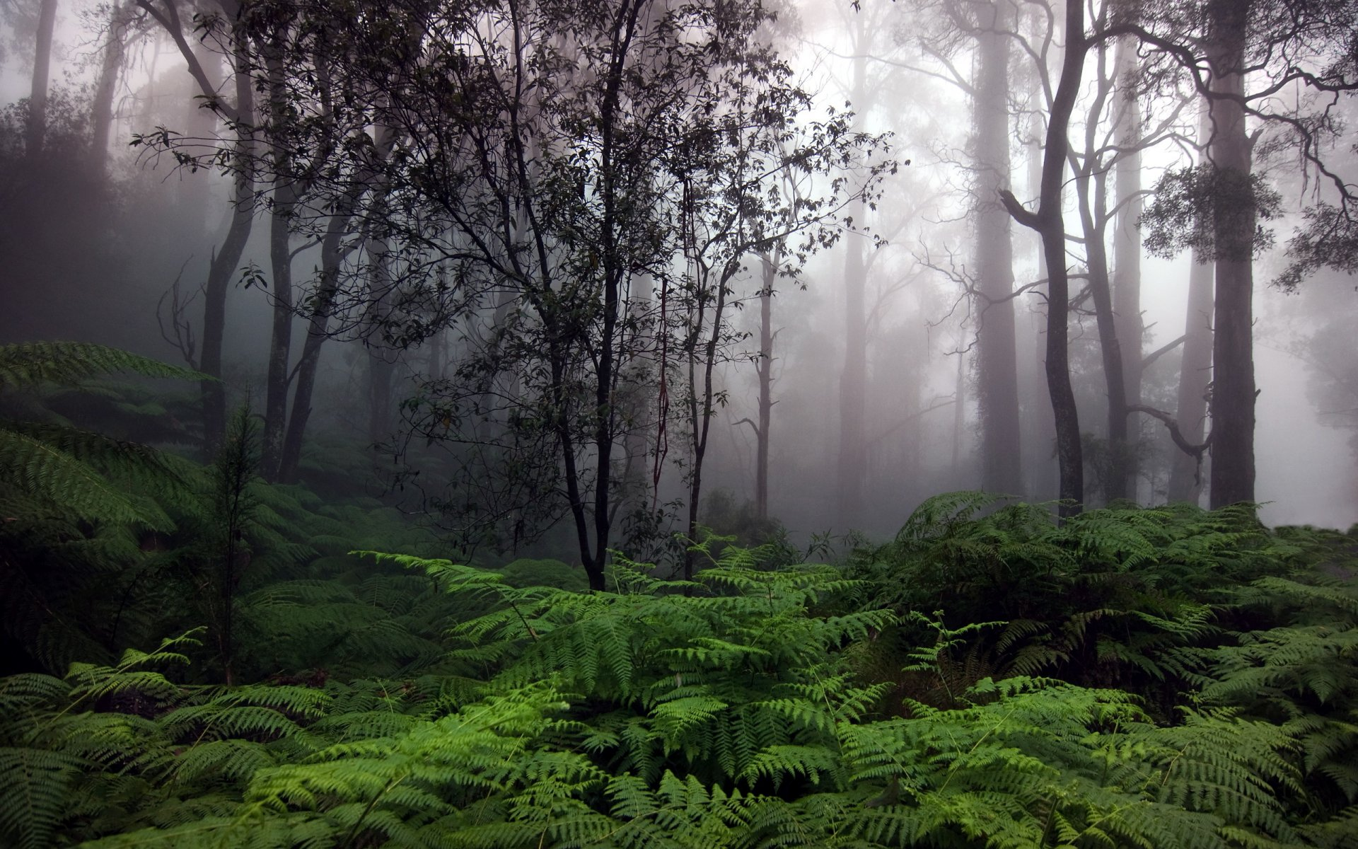 forest and environment The ministry of environment & forests (moef) is the nodal agency in the administrative structure of the central government for the planning, promotion, co-ordination and overseeing the implementation of india's environmental and forestry policies and programmes.
