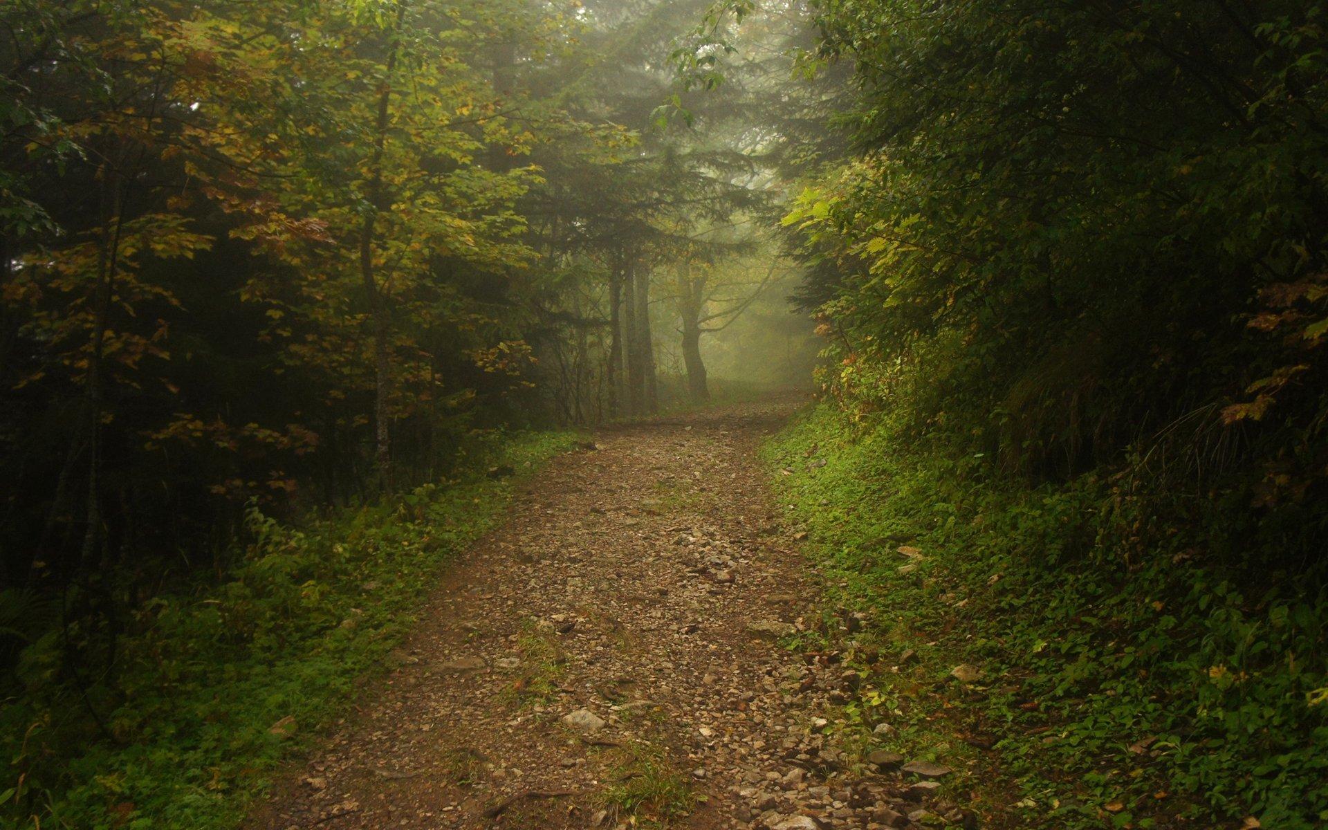 Заброшенная дорога в лесу  № 1103916 без смс