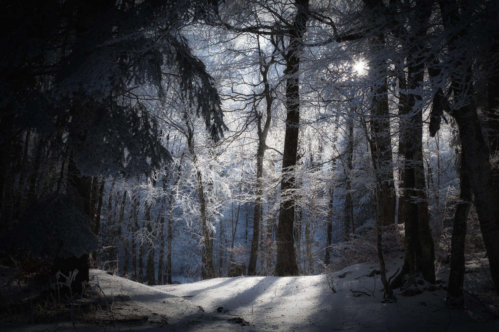 менее фото лес зима полночь крупными