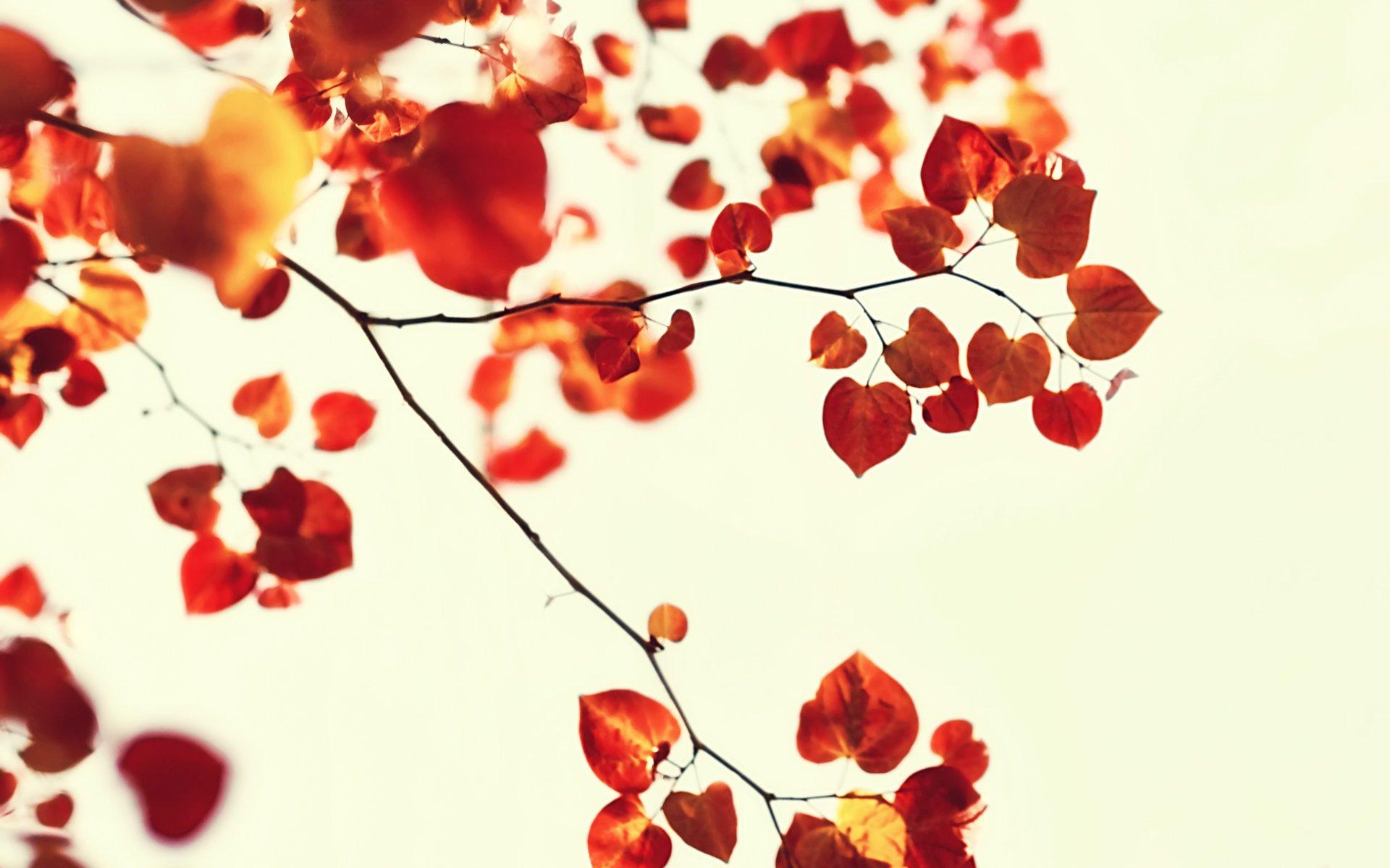 листья ветка фон  № 3219012  скачать