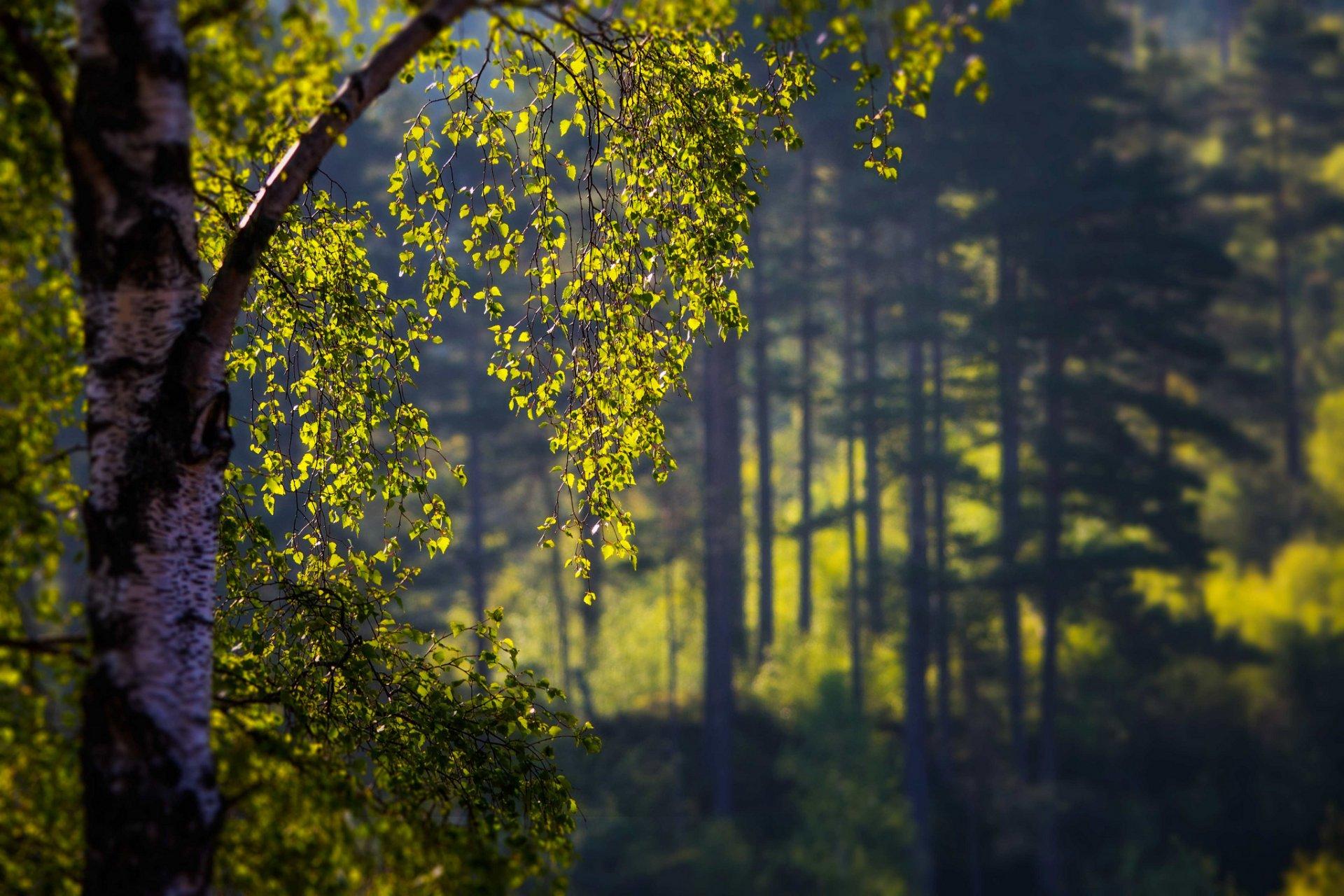 деревья природа ветка trees nature branch  № 439566 бесплатно