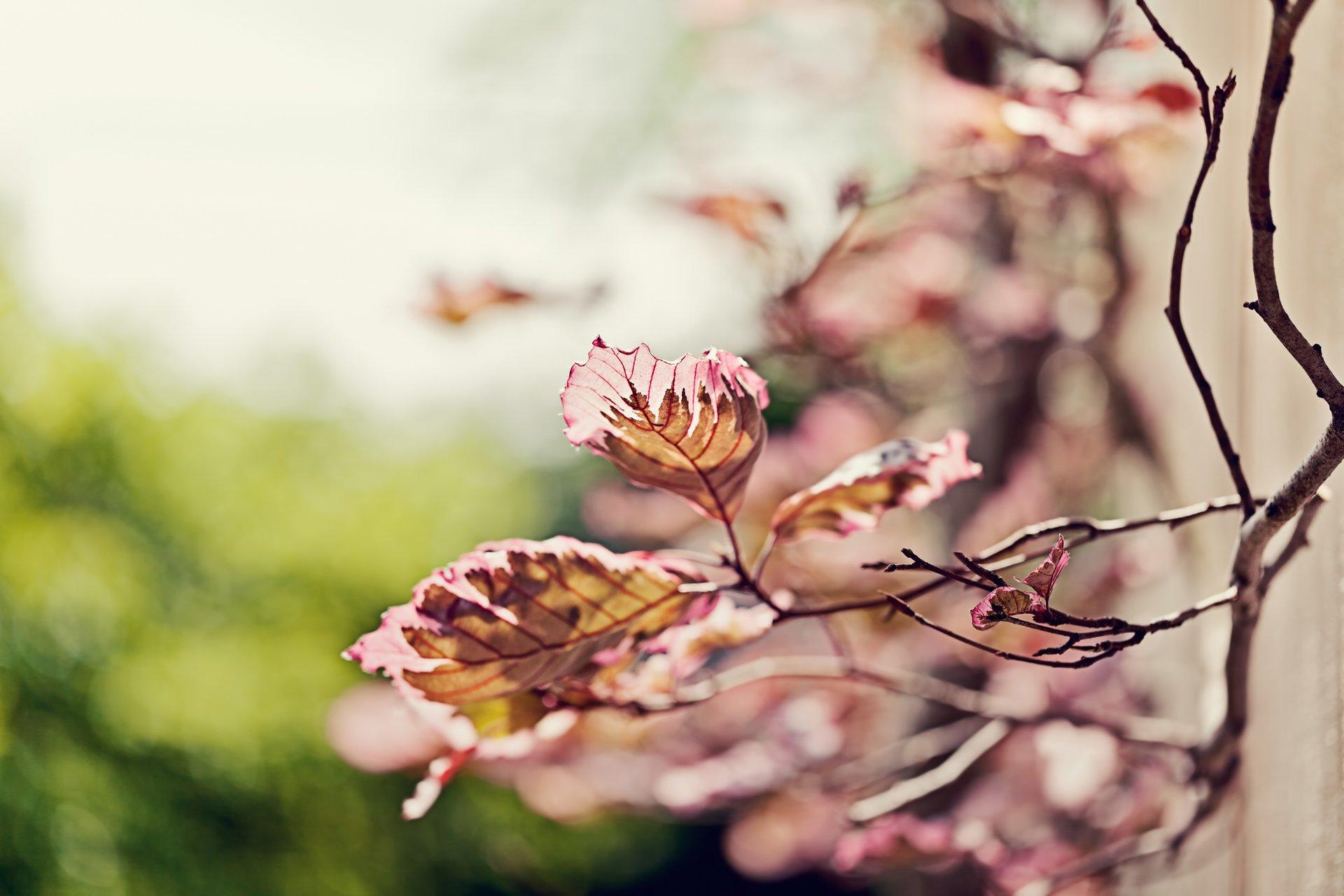 природа ветка листья nature branch leaves  № 2254  скачать
