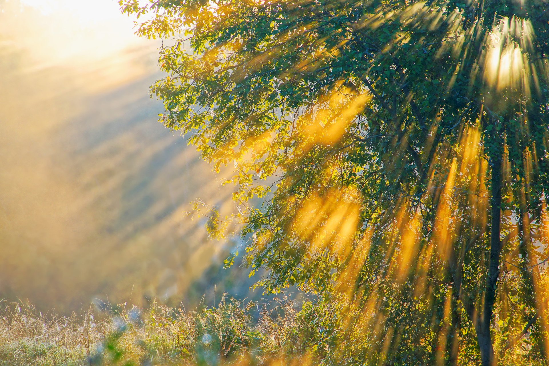 утро природа картинки
