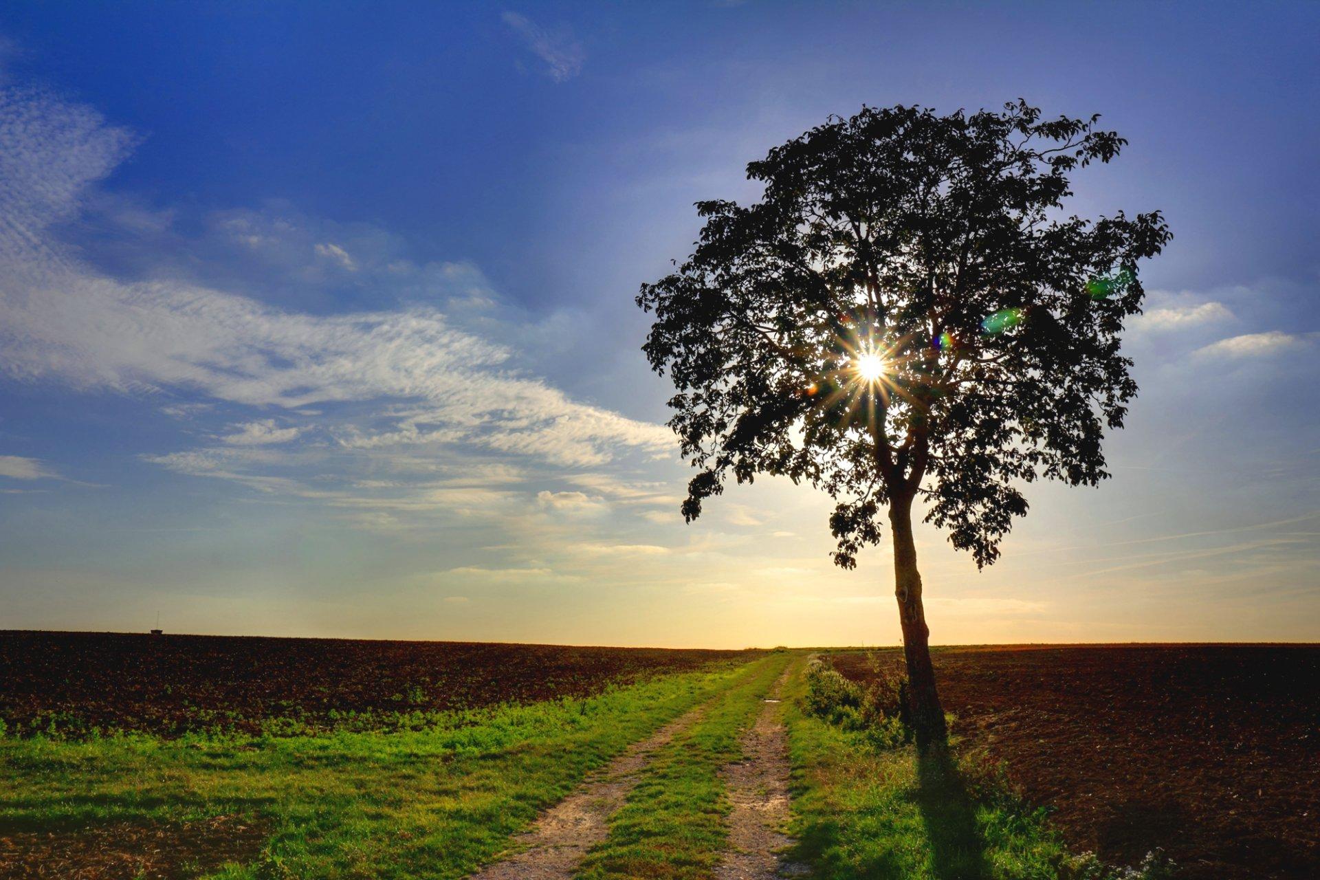 поле дерево  № 3020570 без смс