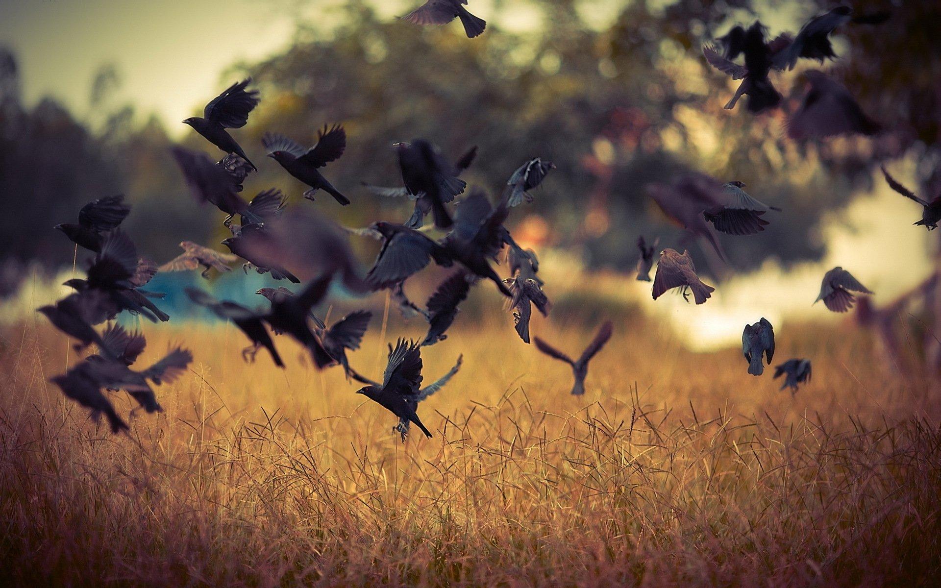 картинки с летящими птицами красивые того