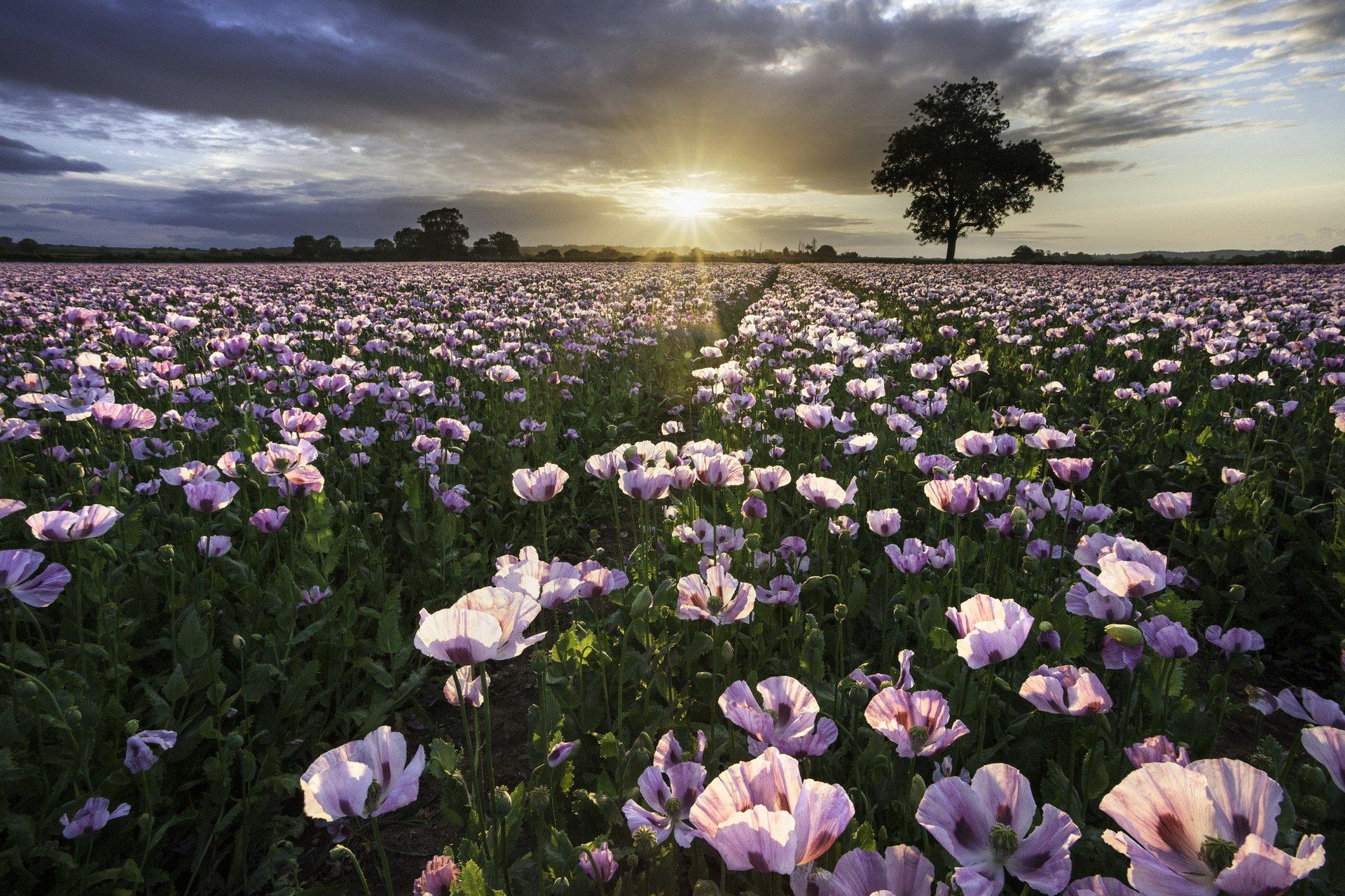 Открытка поле с цветами