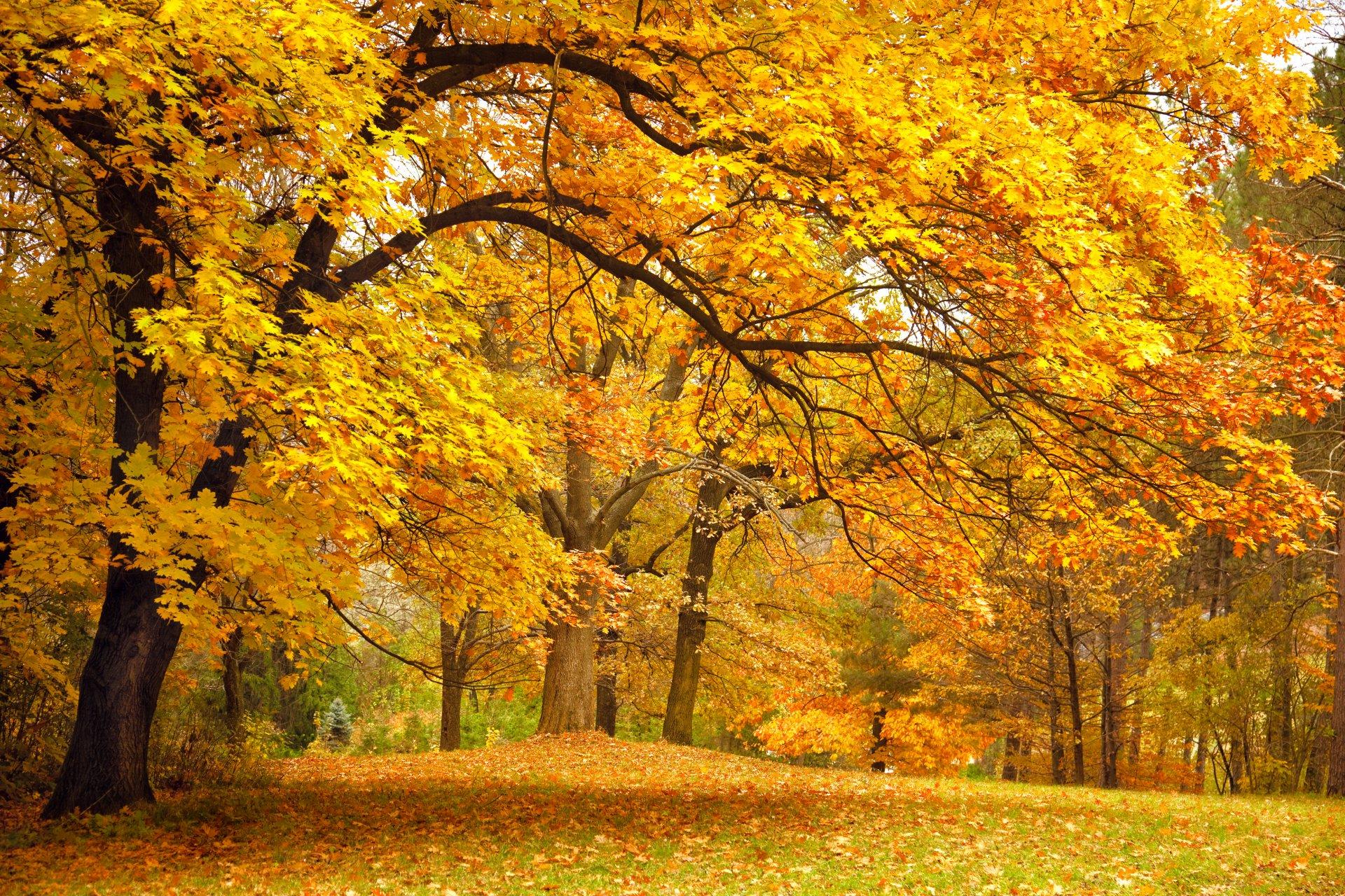Banco de fotos de paisajes gratis 46