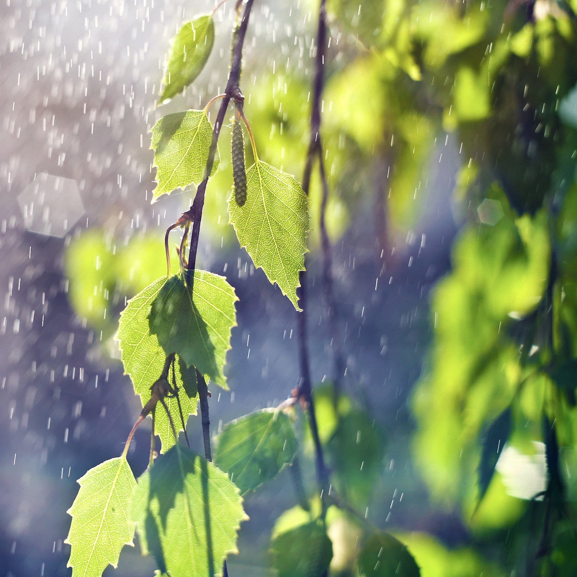 листья ветка забор палки без смс
