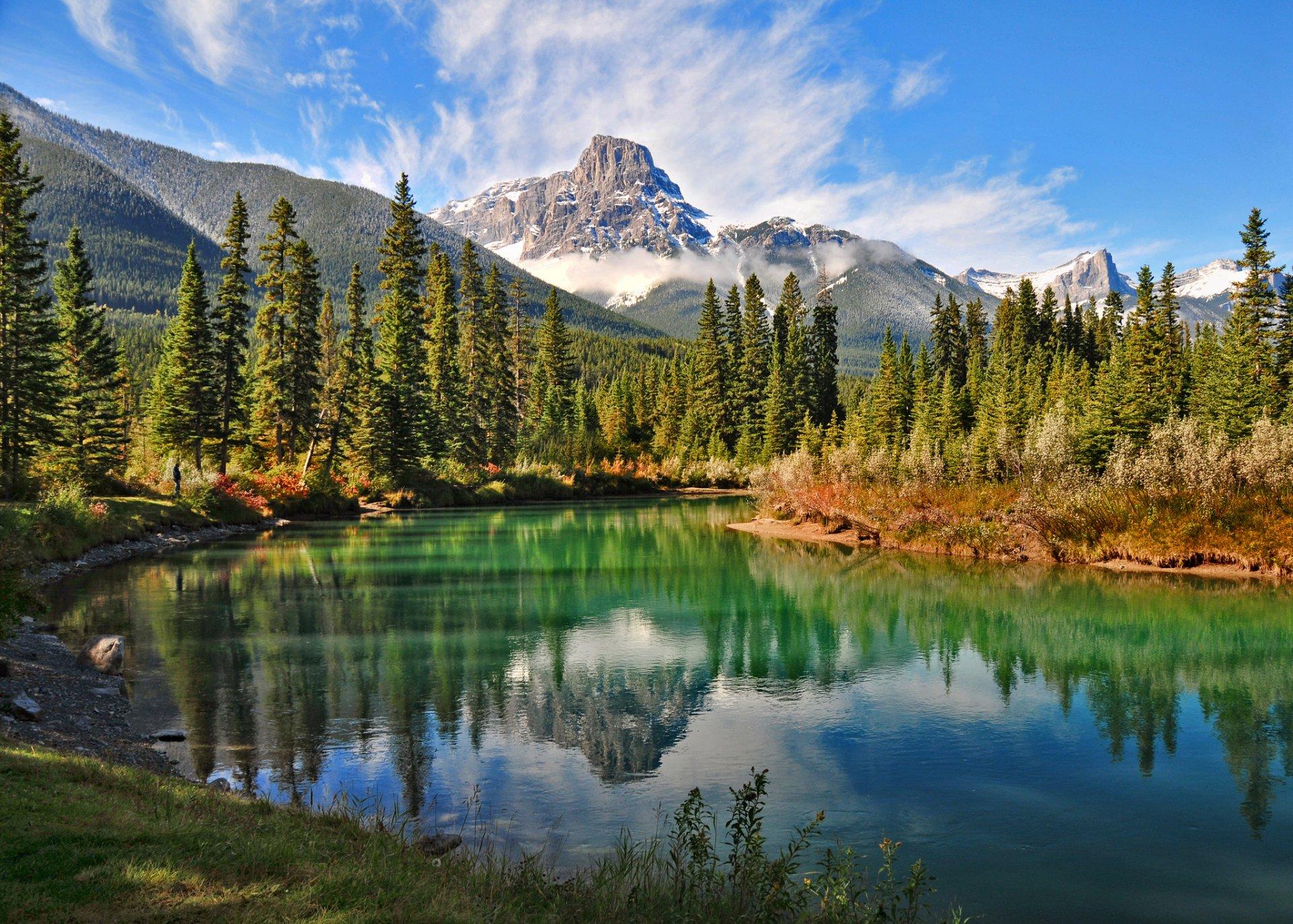 канада леса фото продажа
