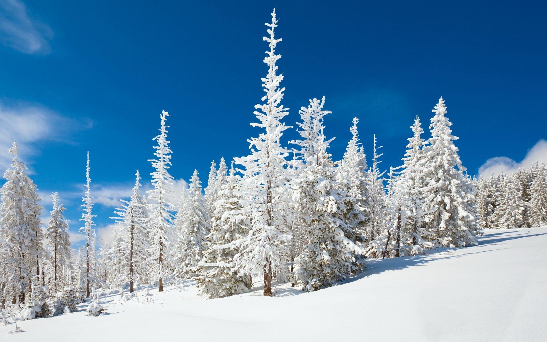 Племянником тете, зимний лес картинки сохранить