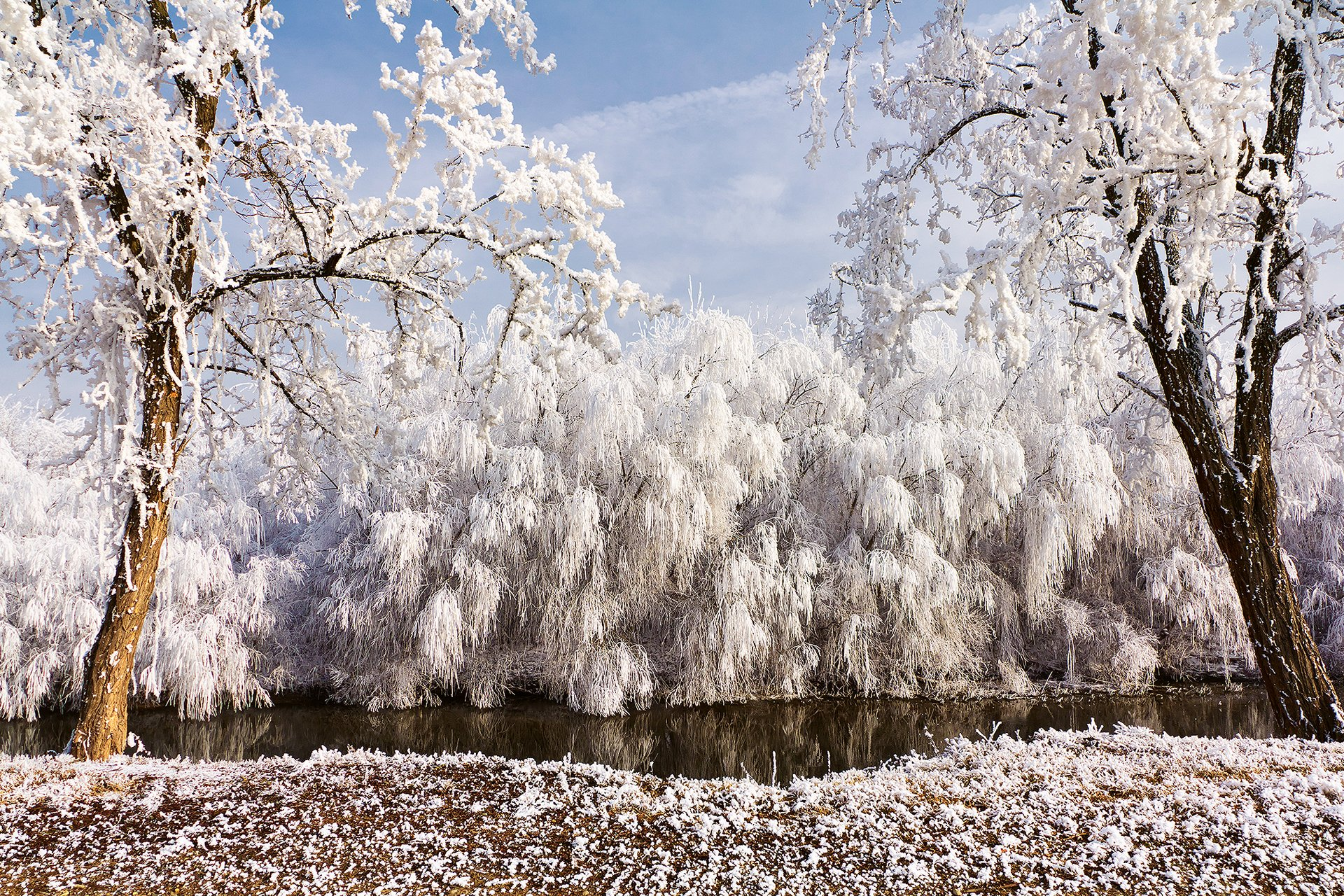 название кубомедуза иней на деревьях фото бокашевский фильмография, биография