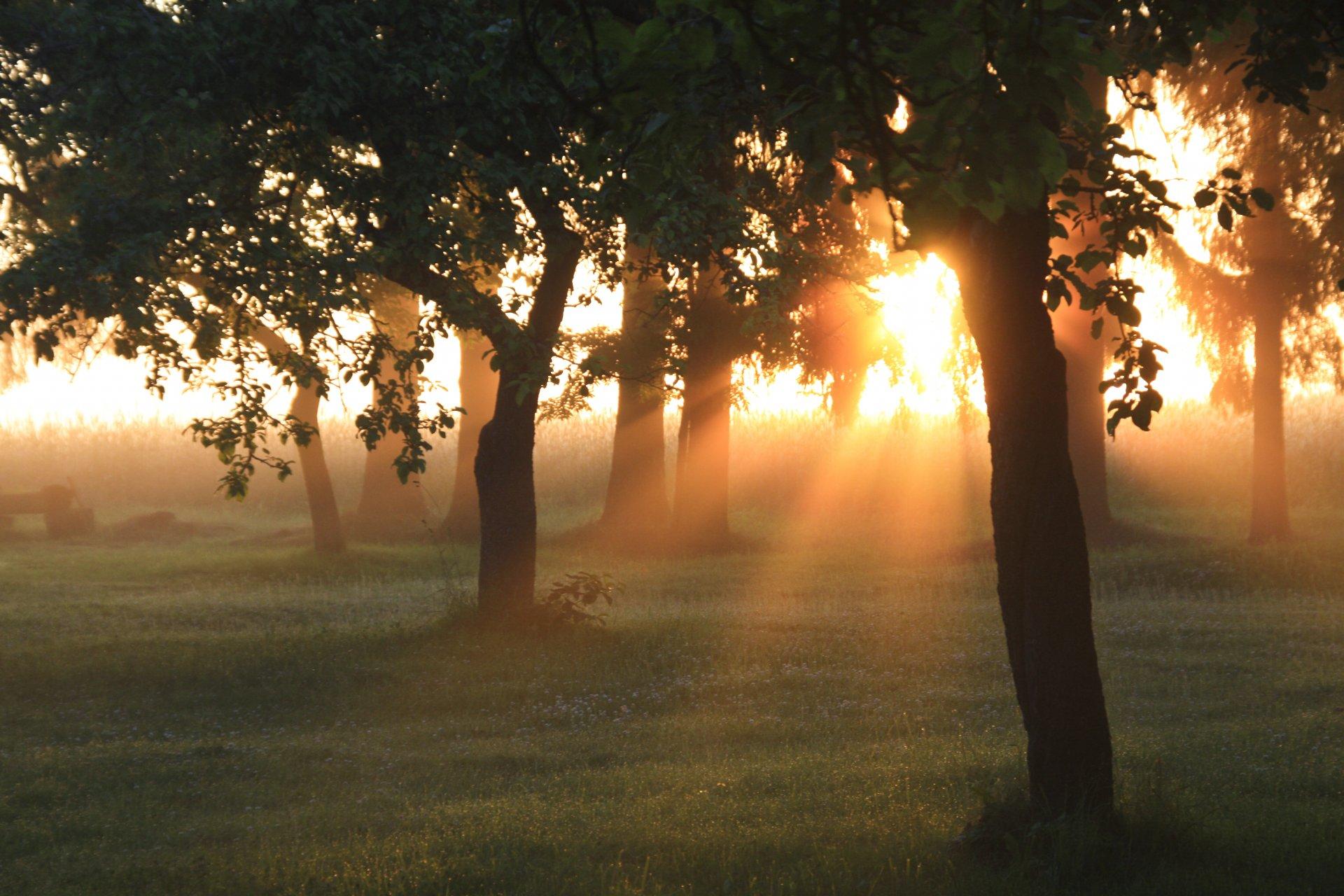 словами, эгильет фото с солнечными лучами утреннего света идеальное соотношение жесткости