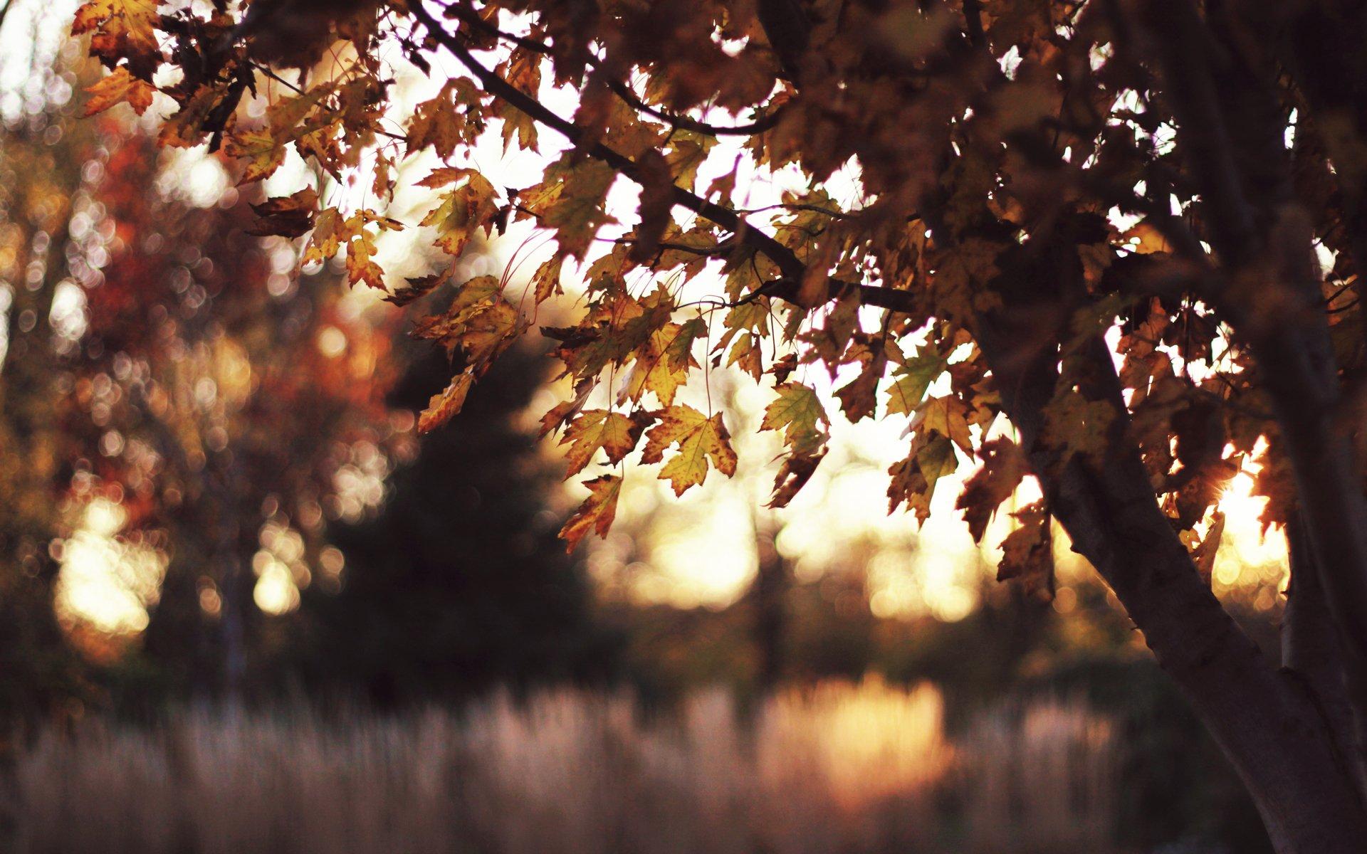 деревья блики плитка  № 3929620  скачать