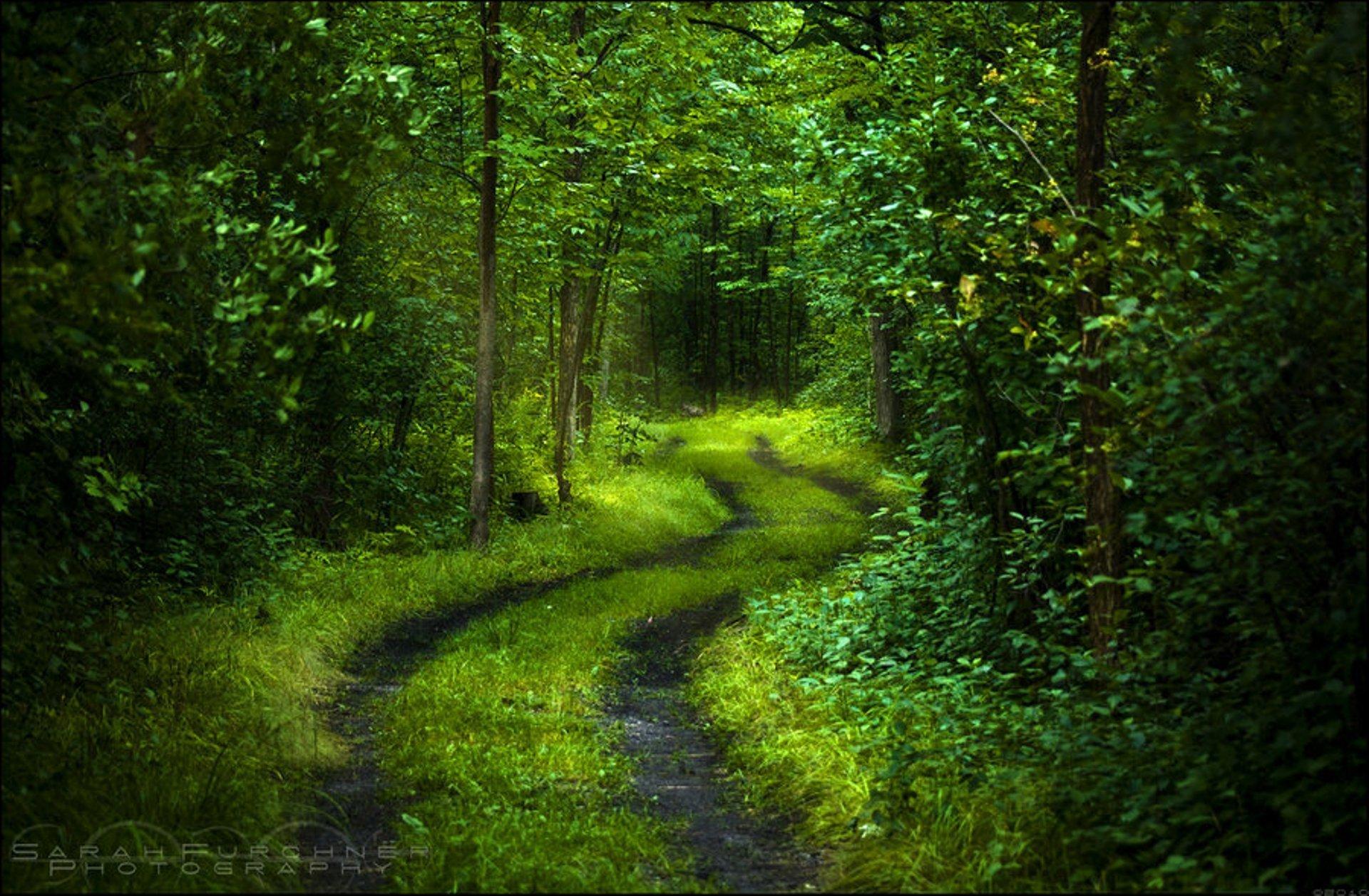 картинки на фон природа лес