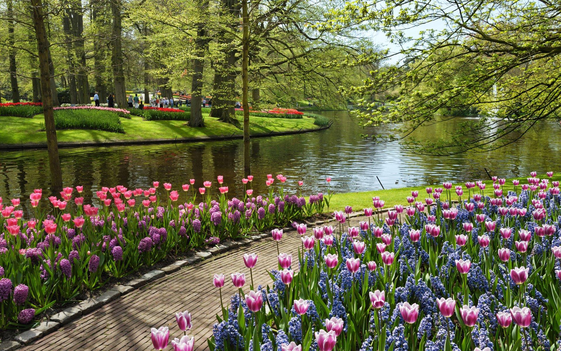 Парк фото цветы