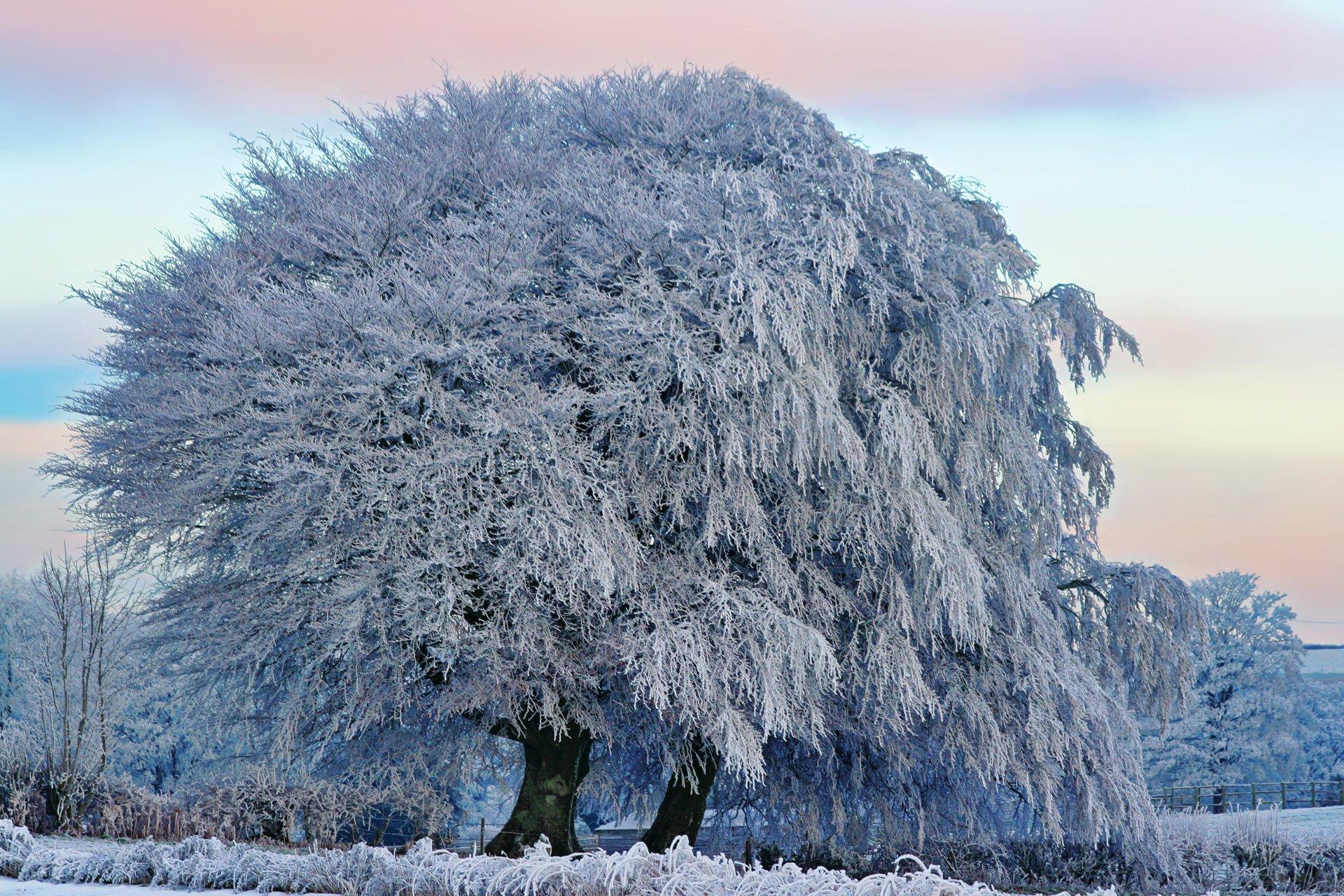 сайте есть иней на деревьях фото смогла самостоятельно найти