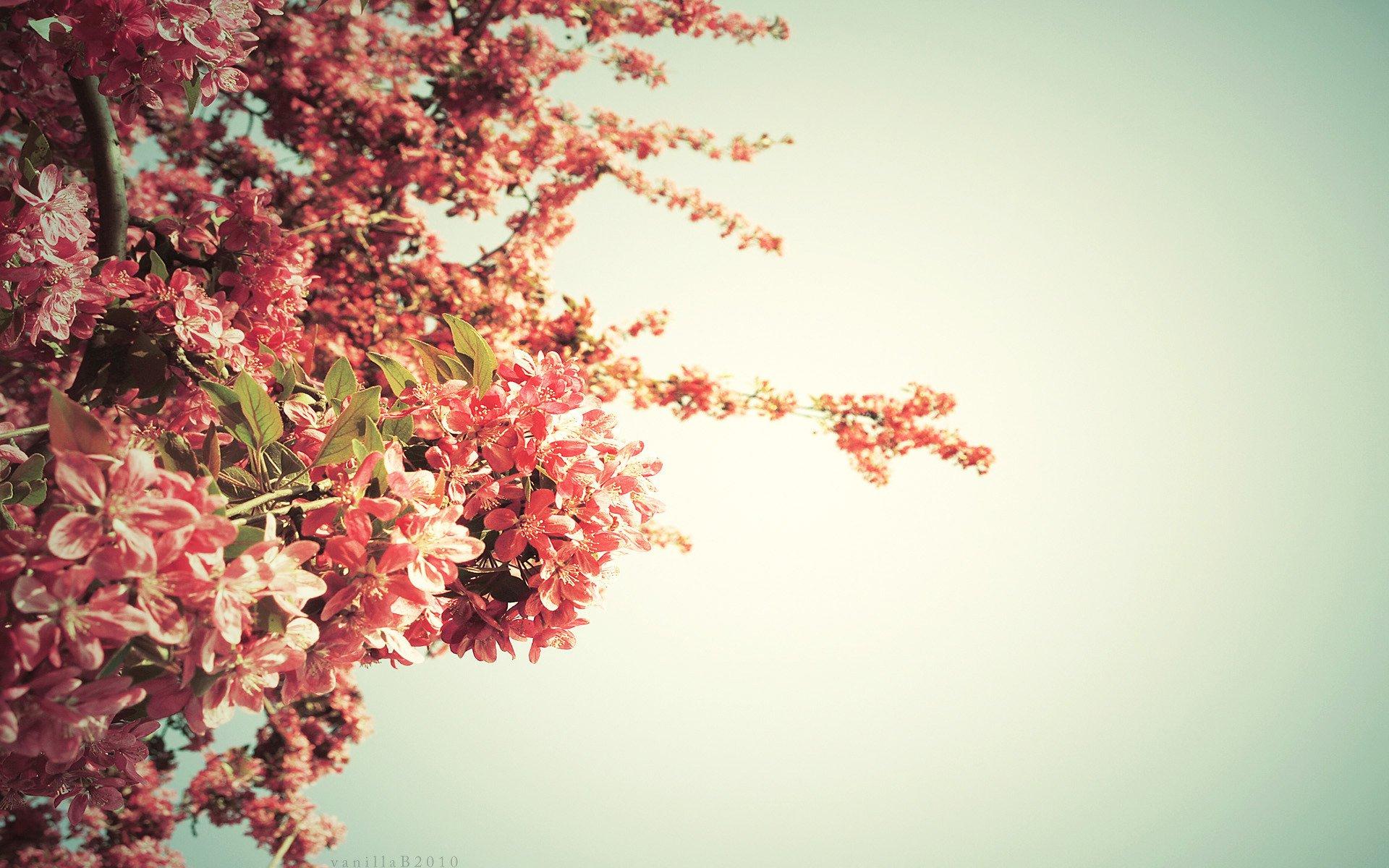 Картинки присылать, деревья фон для открытки
