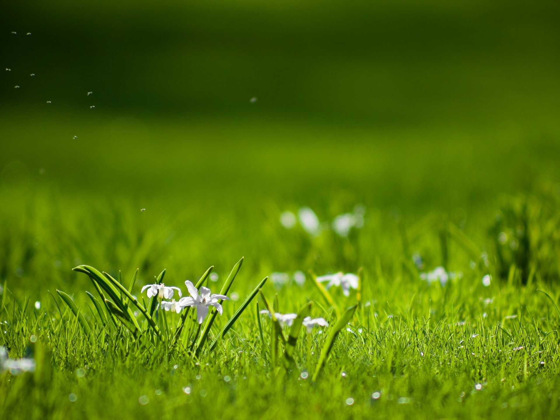 Как сохранить цвет зелени