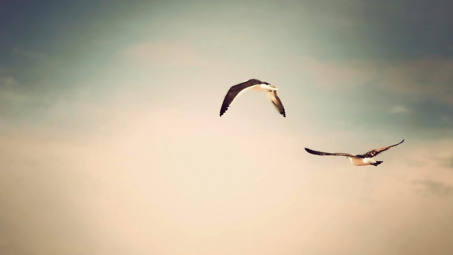 чайка полет небо онлайн