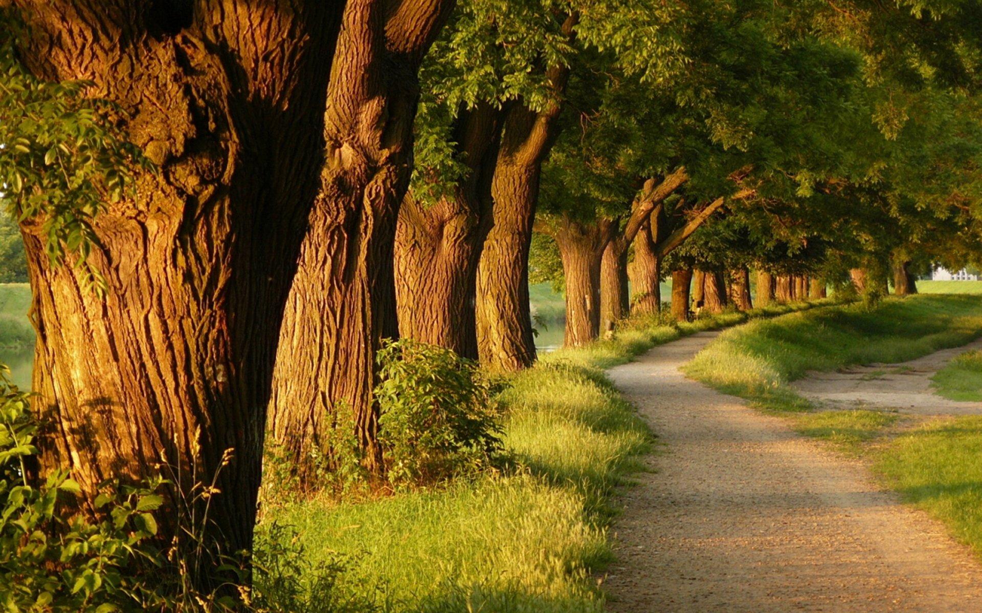 бесплатно фотообои на стену аллея деревьев у дороги постом