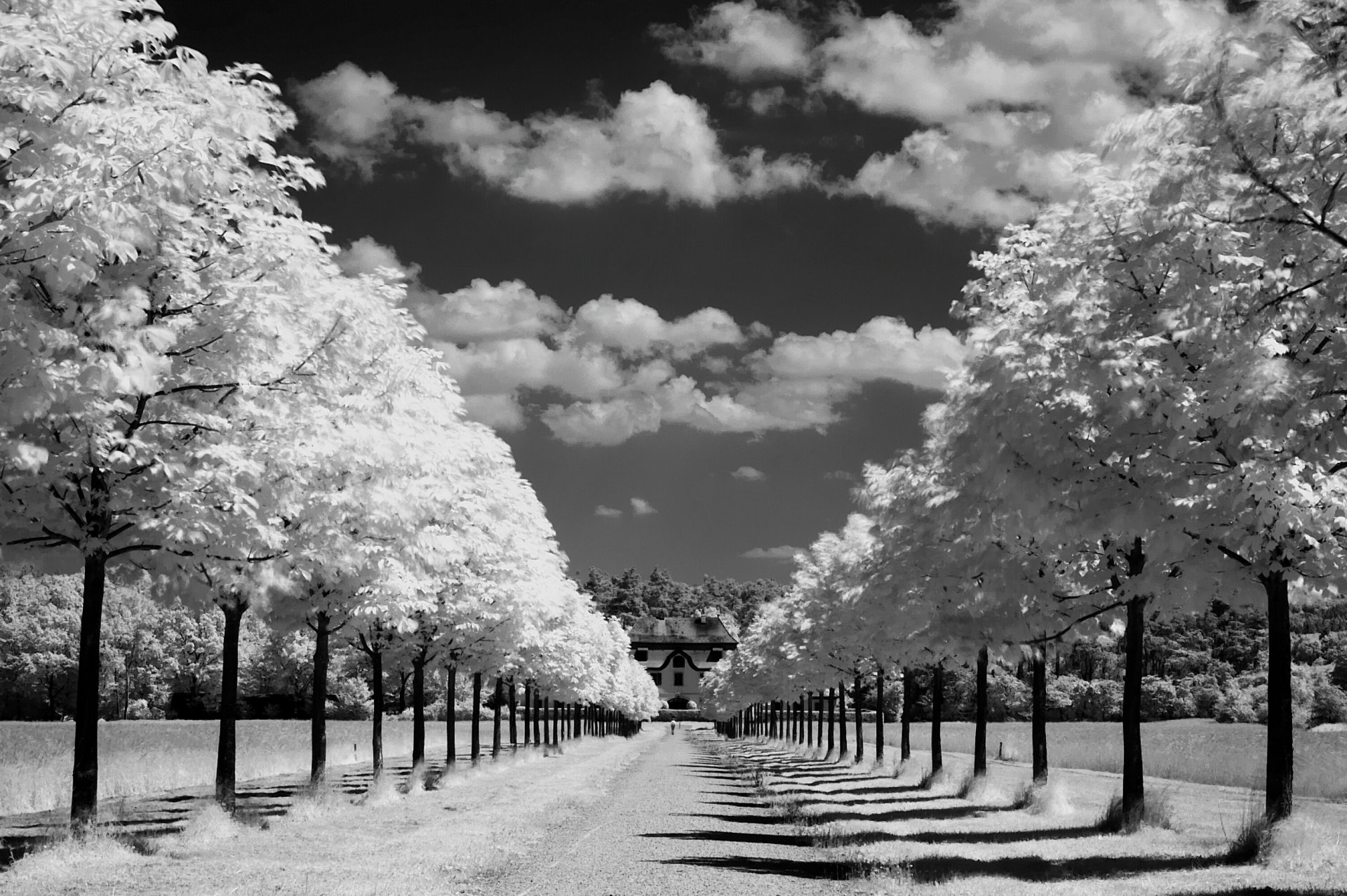 Картинка природа черно-белая
