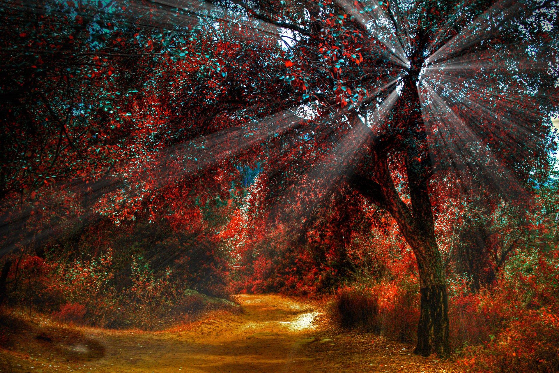 картинки на телефон красивые природа осень пост посвящается тем