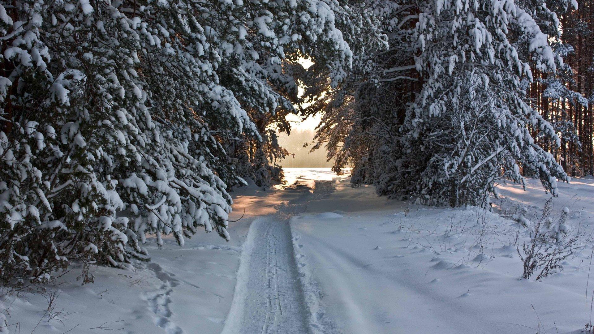 сообщает снежная тропинка фото зимние видим, часы только