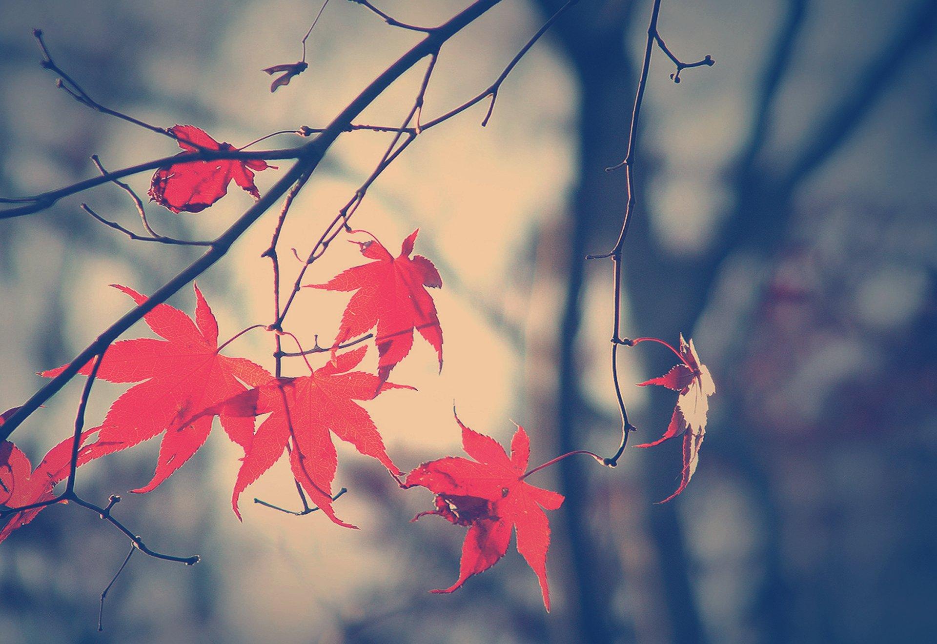 ветка осень листья загрузить