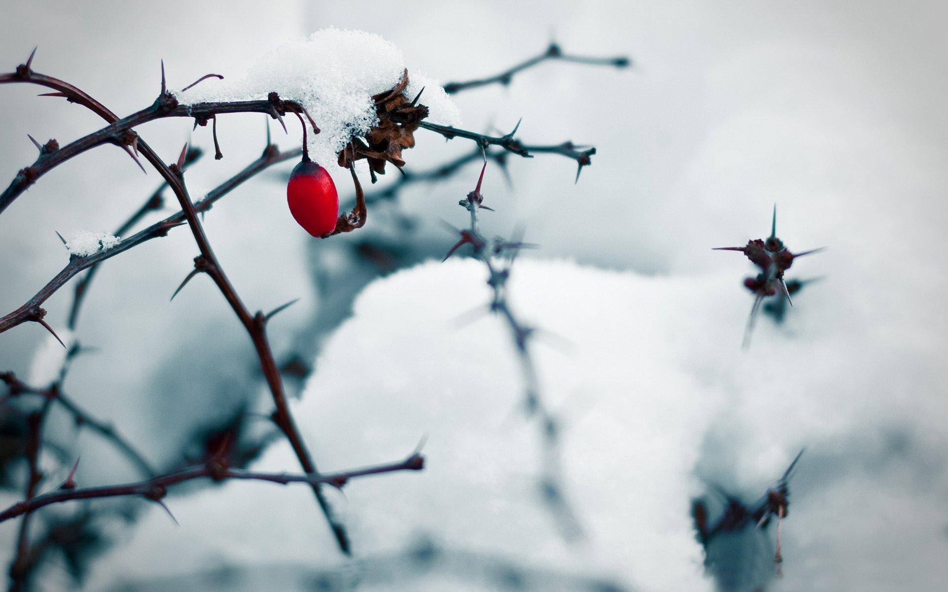 Под снегом скачать