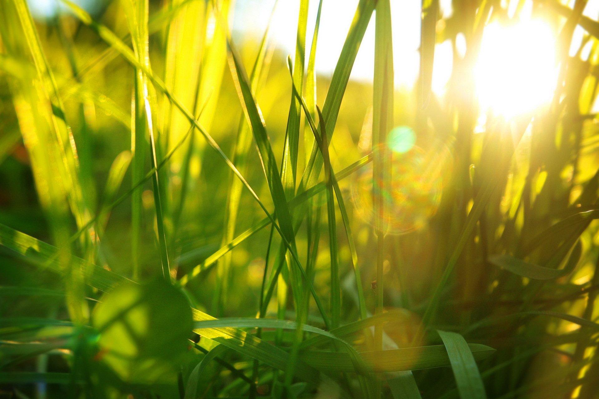 лучи солнца на траве картинки популярные