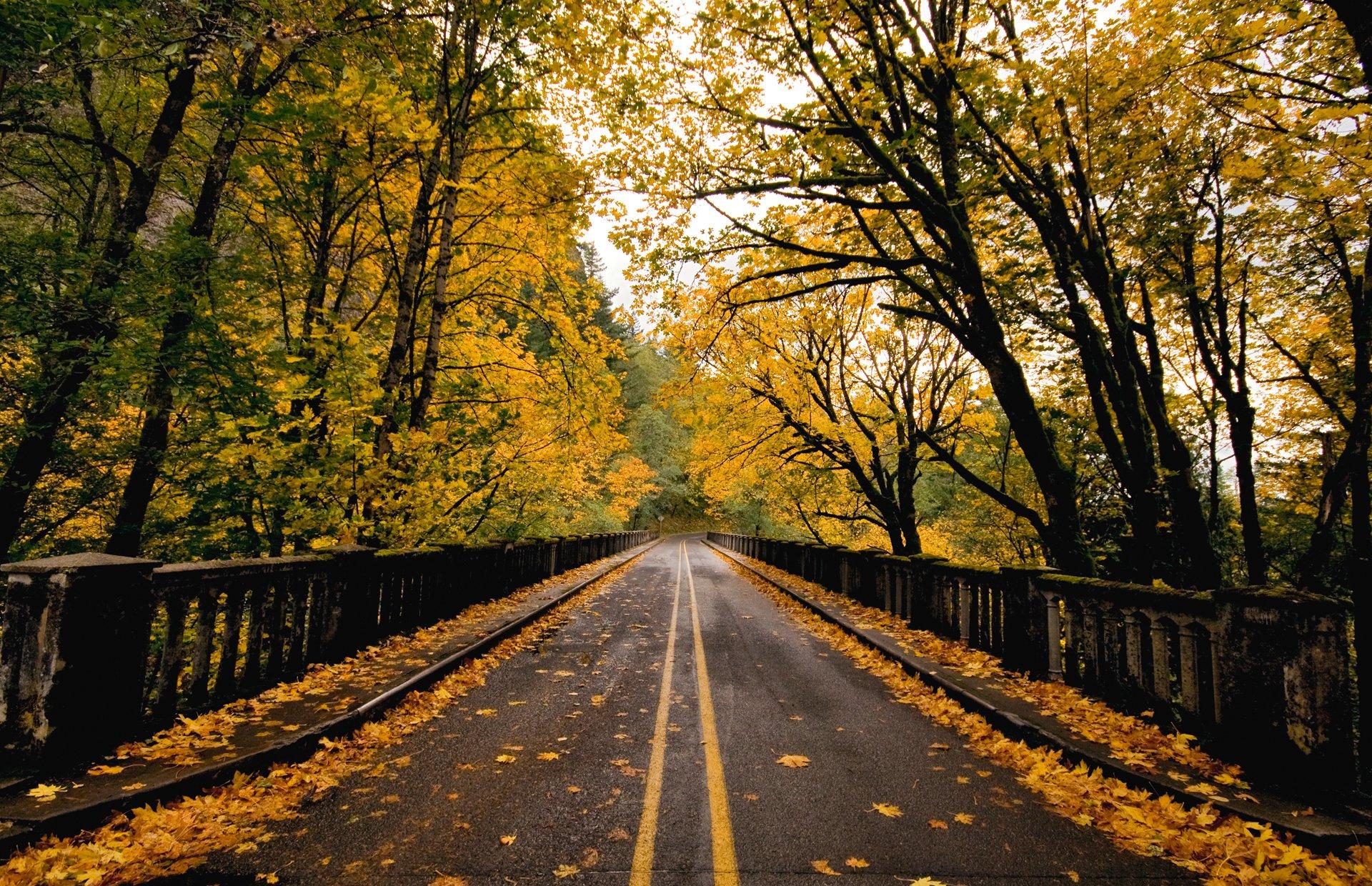 осень листья дорога бесплатно