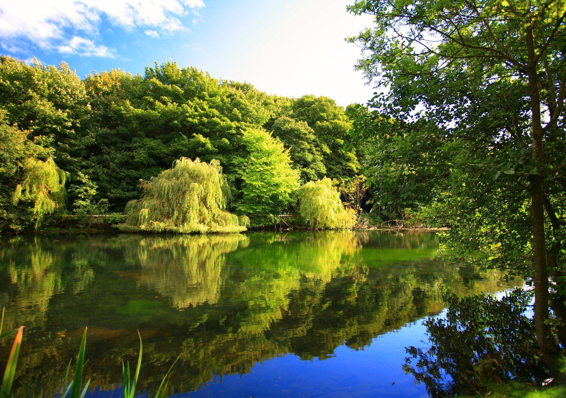 фото деревья и река на рабочий стол фото видно место