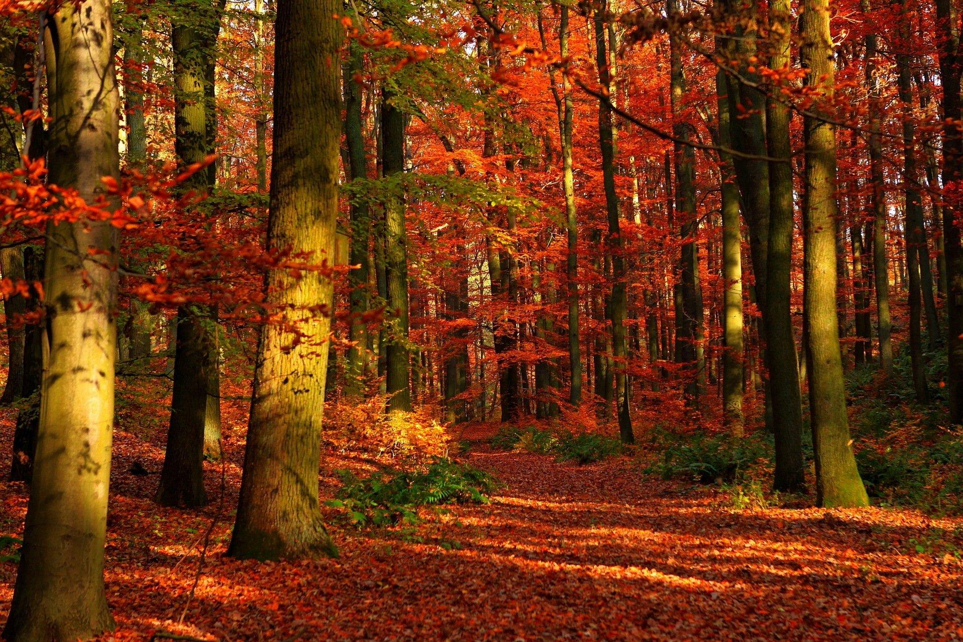 роналду осенний лес фото картинки на рабочий стол рано или поздно