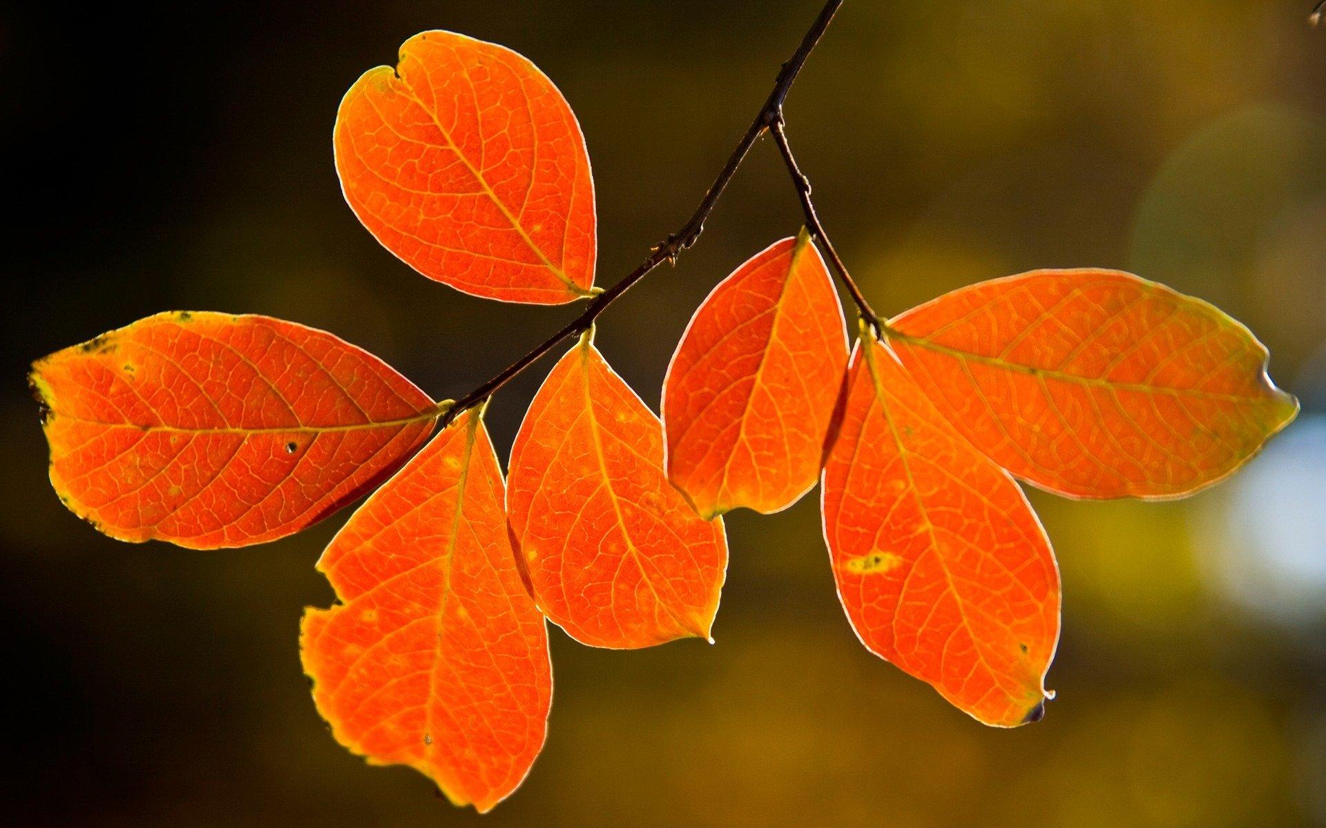 одна красивые картинки разных листьев таким выражениям