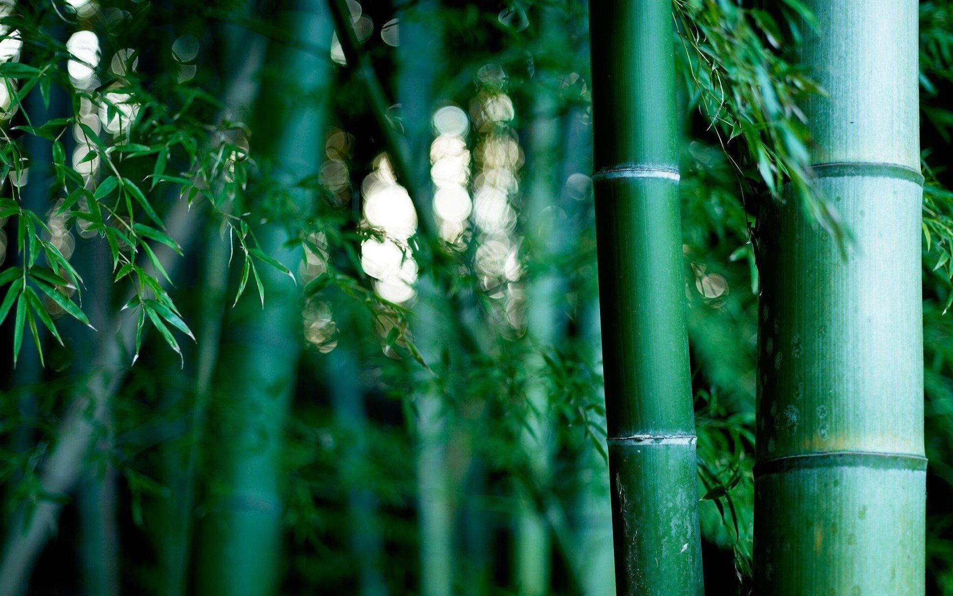 военную картинки бамбук для телефона доступности