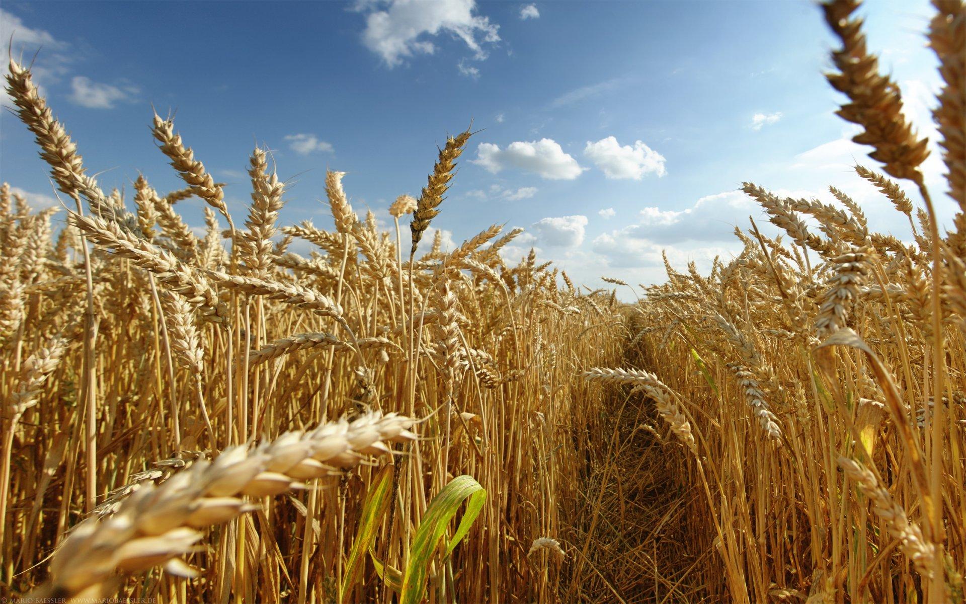 Fotos de granjas agricolas 95