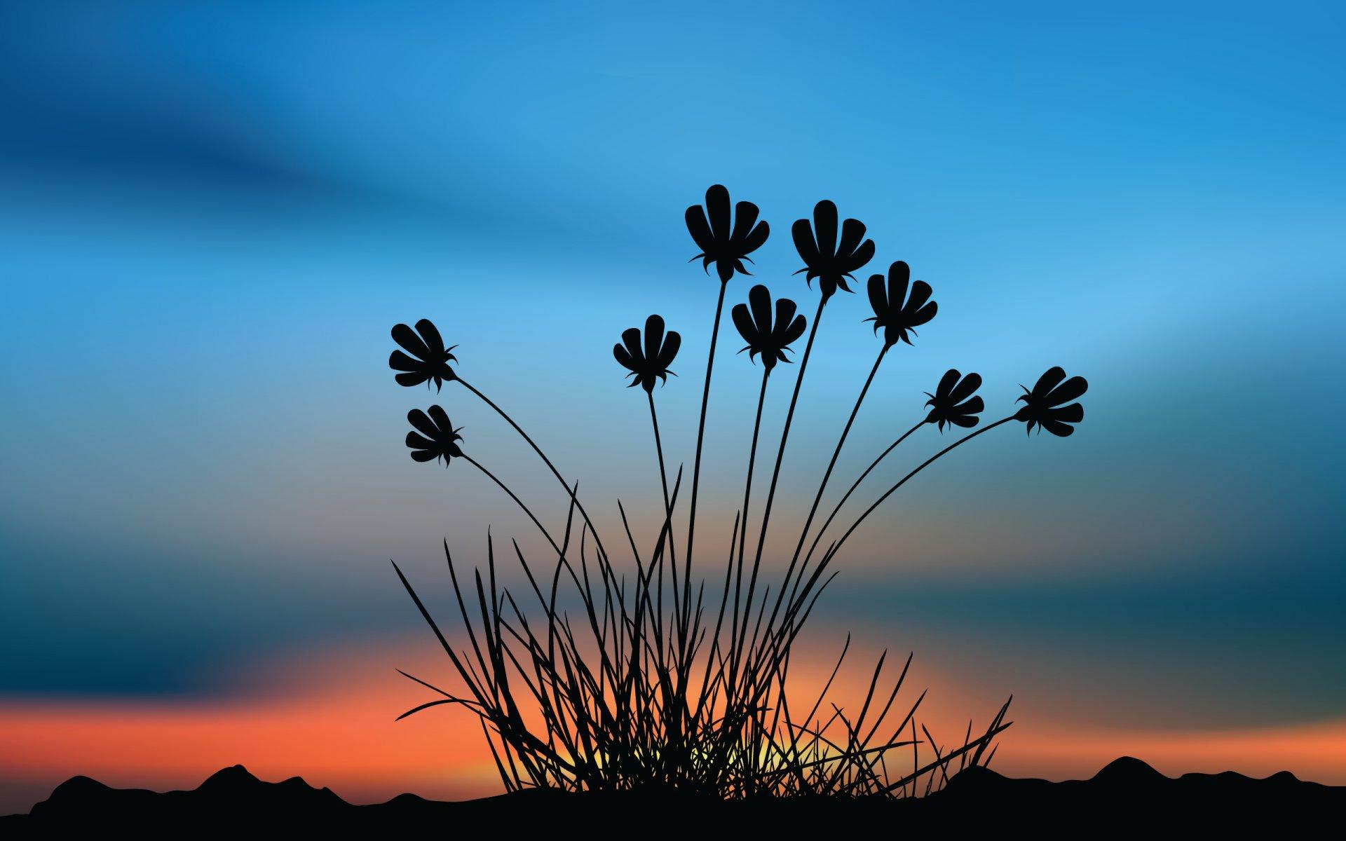 вот голливуде картинки цветы на фоне заката провалился расщелину