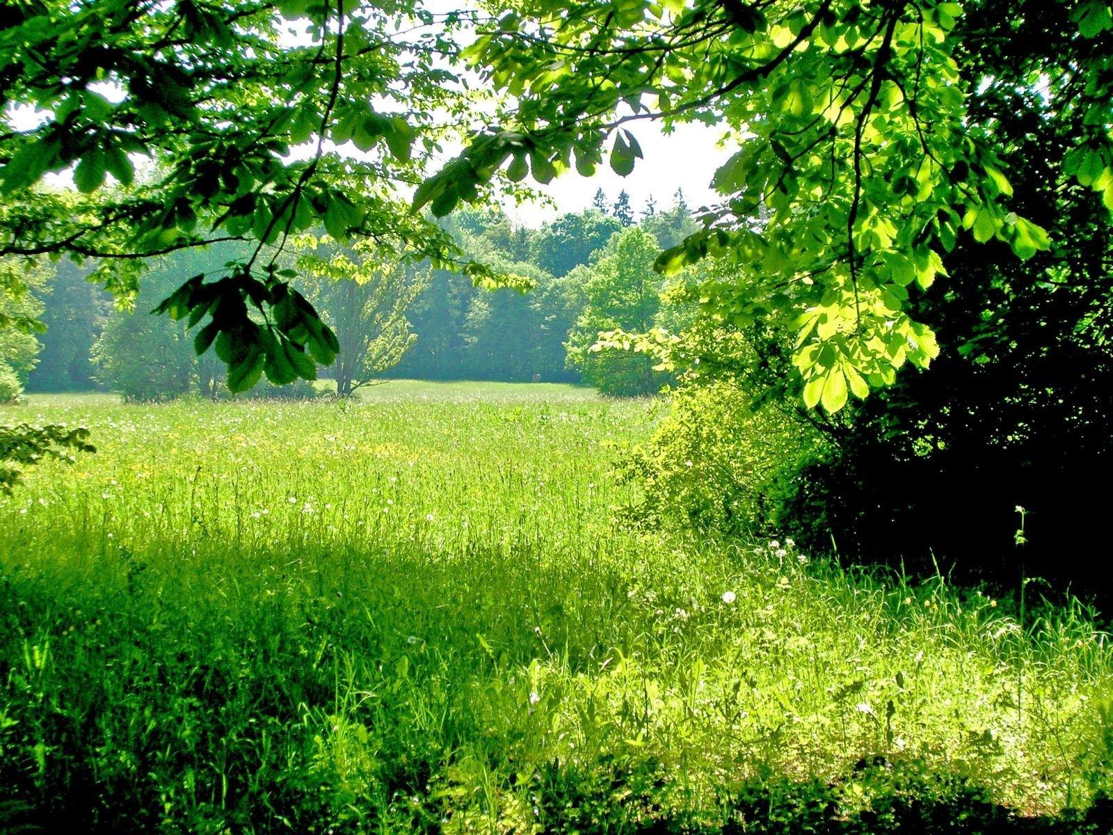 всех удобств на зеленой полянке фото ещё выложу здесь