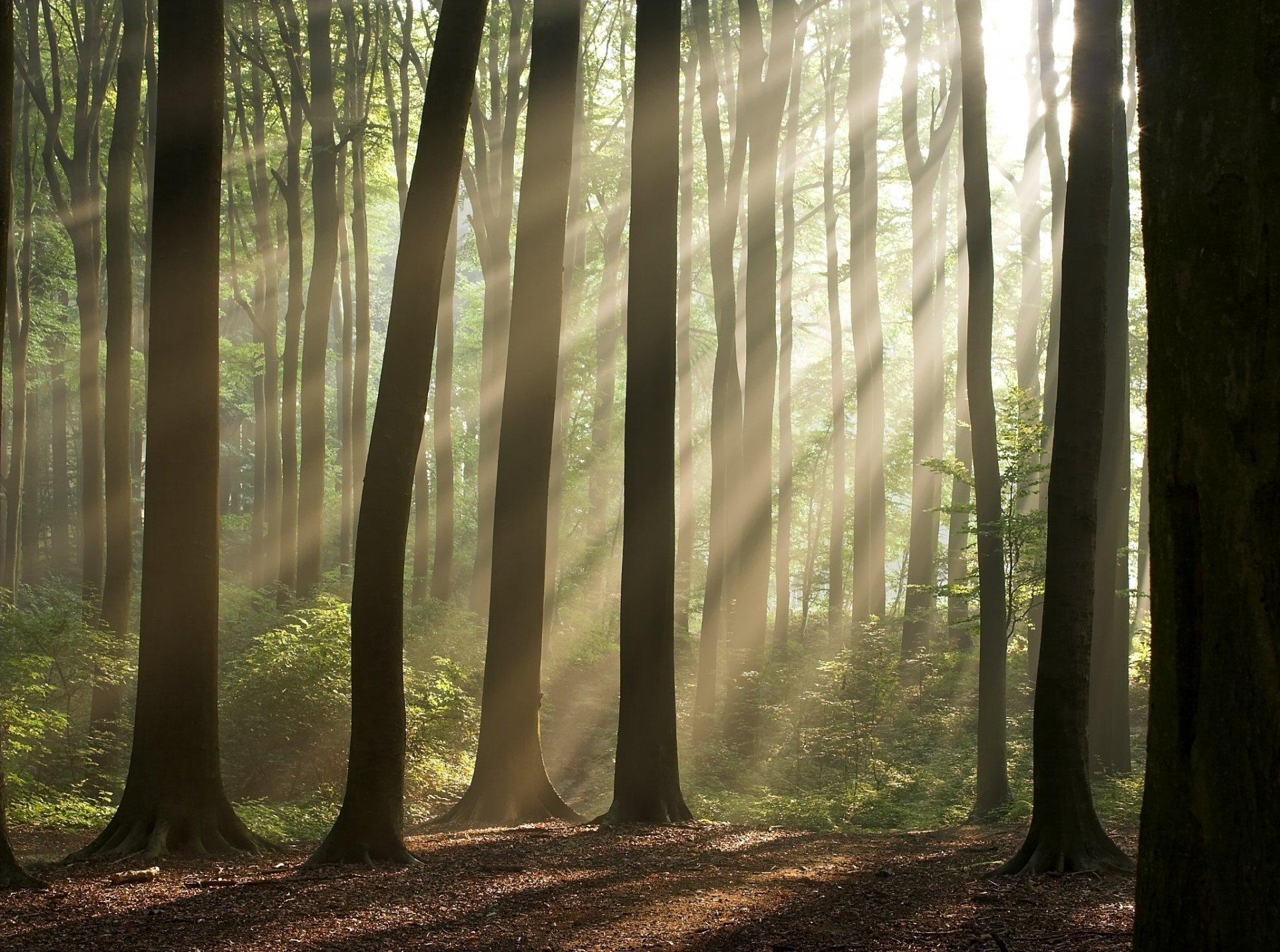 Лучи лес деревья  № 3847456 бесплатно