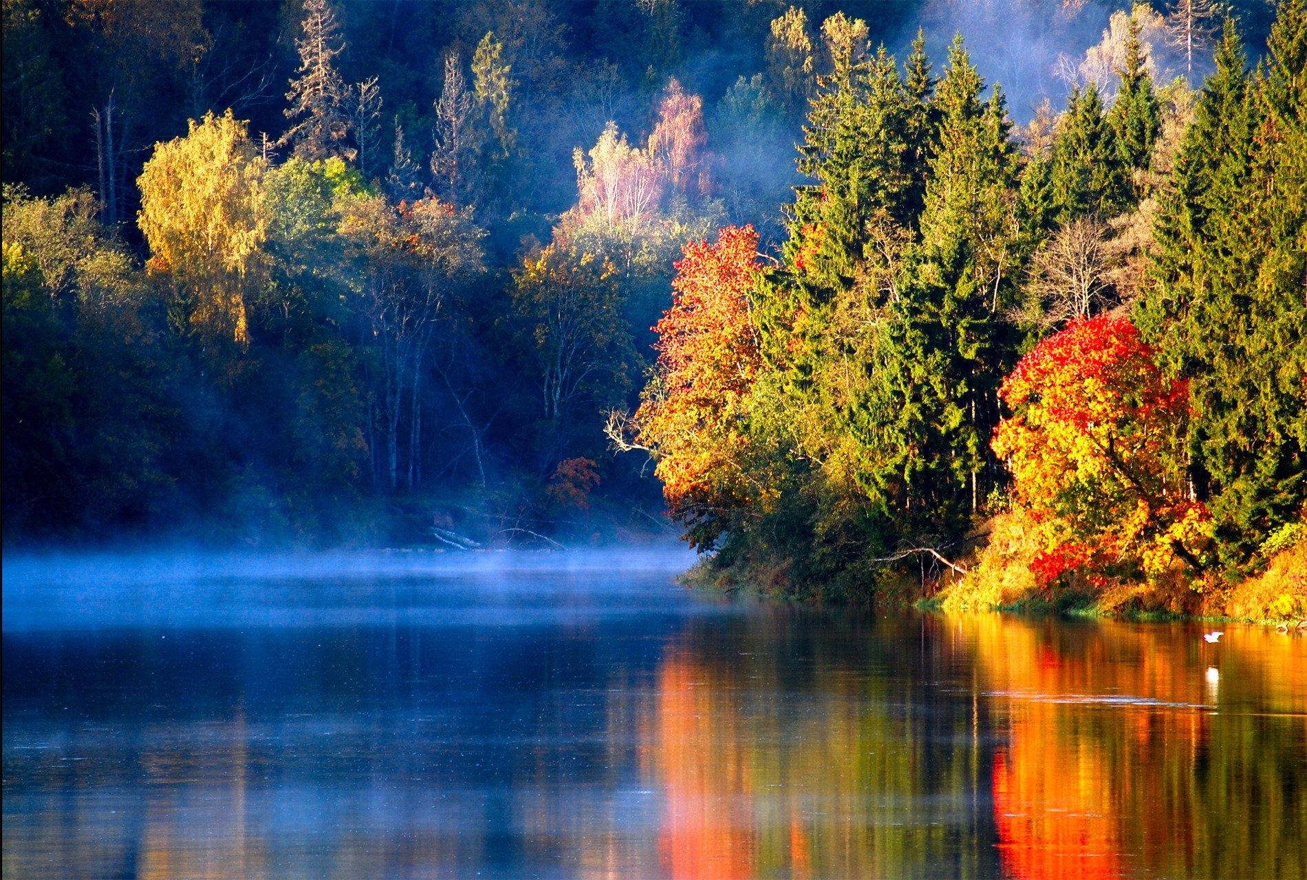 речка осень лес лучи бесплатно