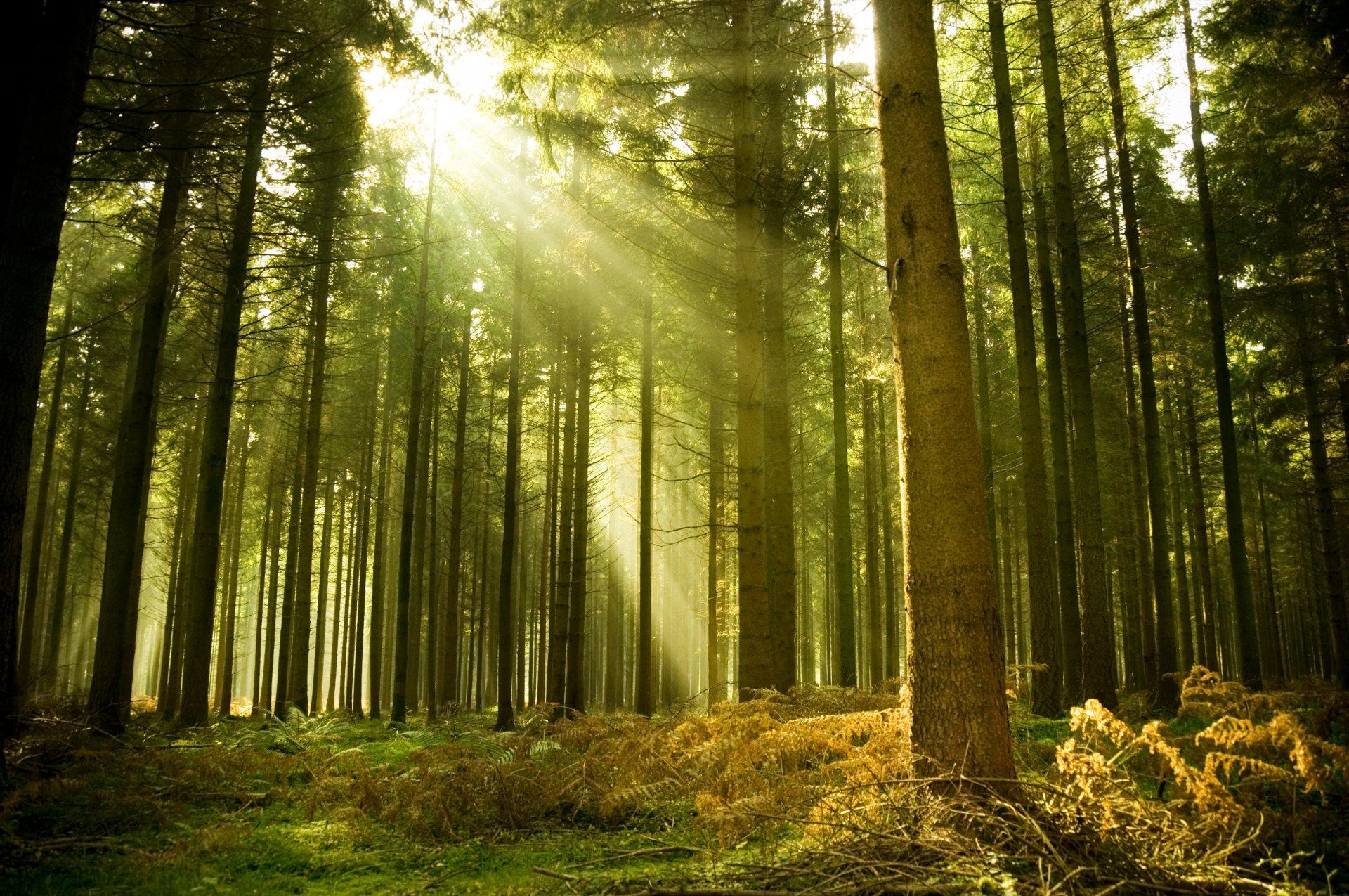 фото на фоне леса - 13