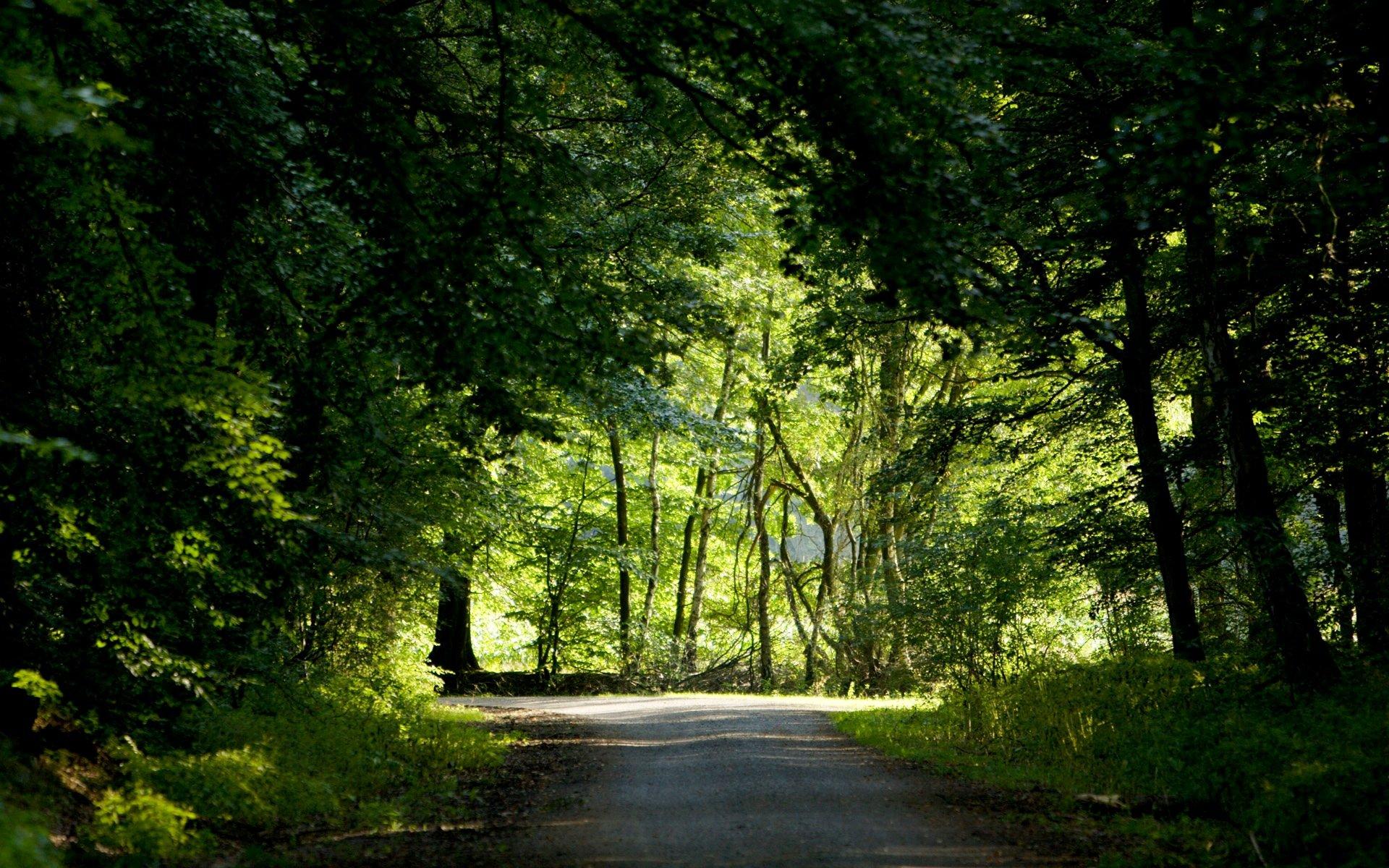 лучи лес дорога лето зелень rays forest road summer greens скачать
